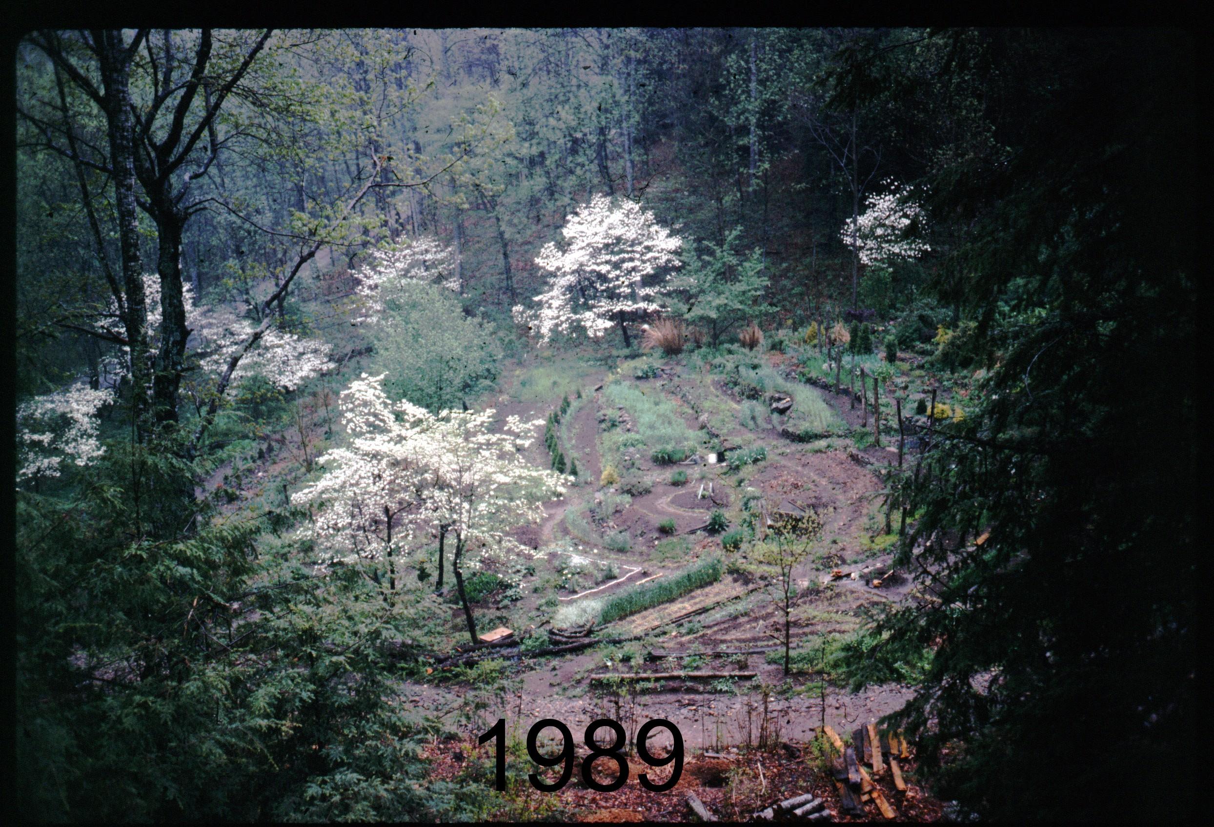1989 house - gdn, dogwoods.jpg