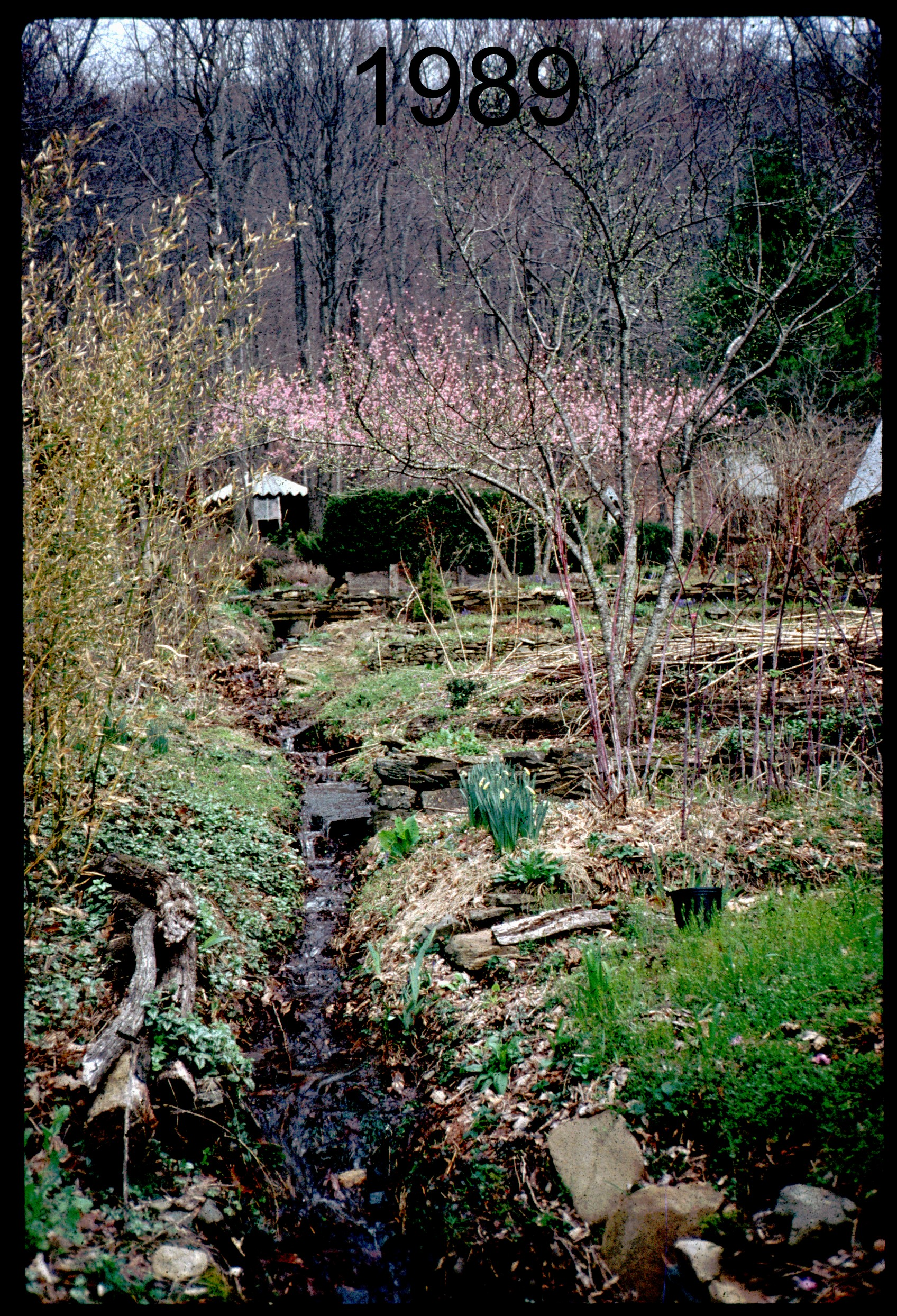 1990 stream-yurt.jpg