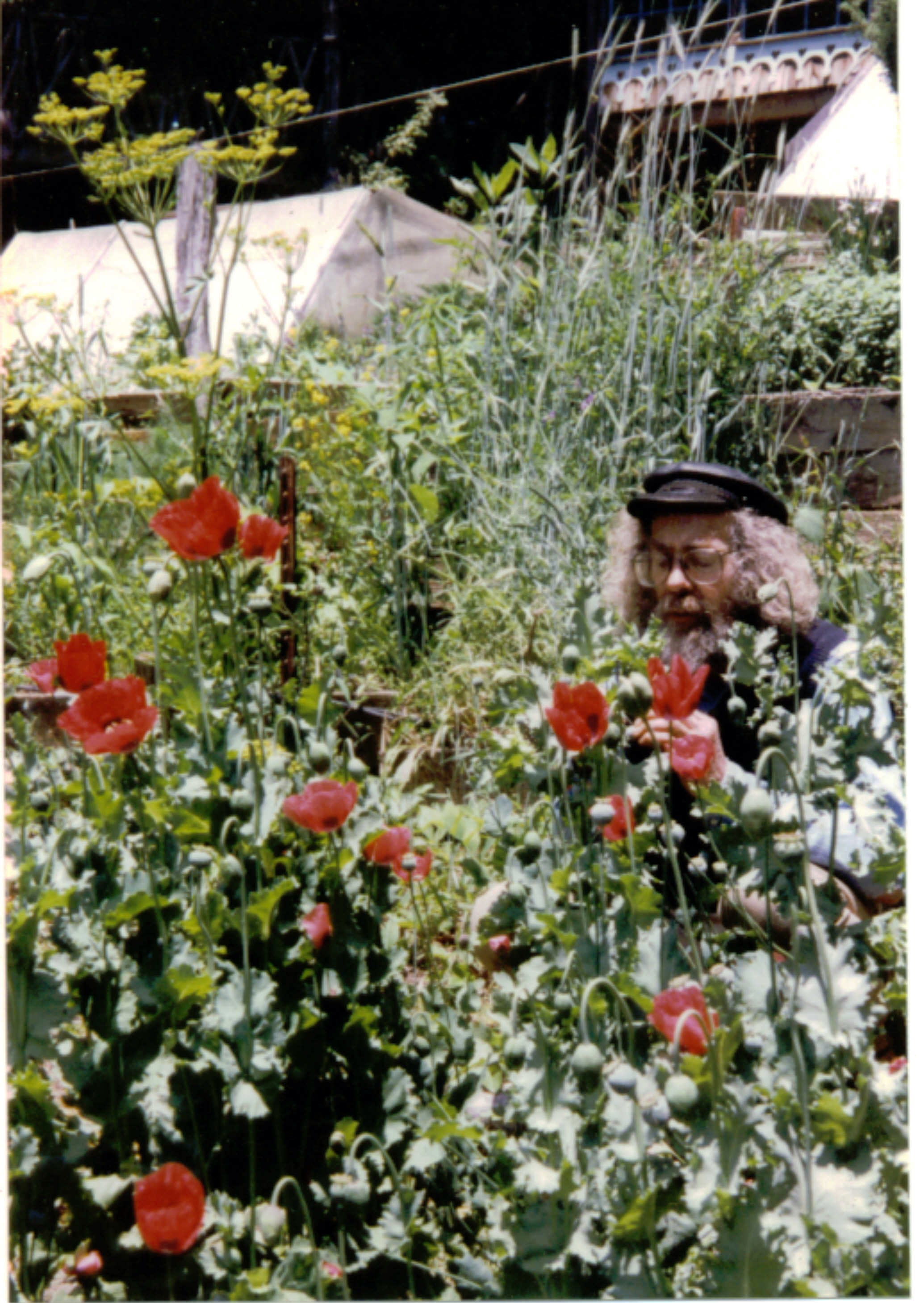 1995 joe with poppies.JPG