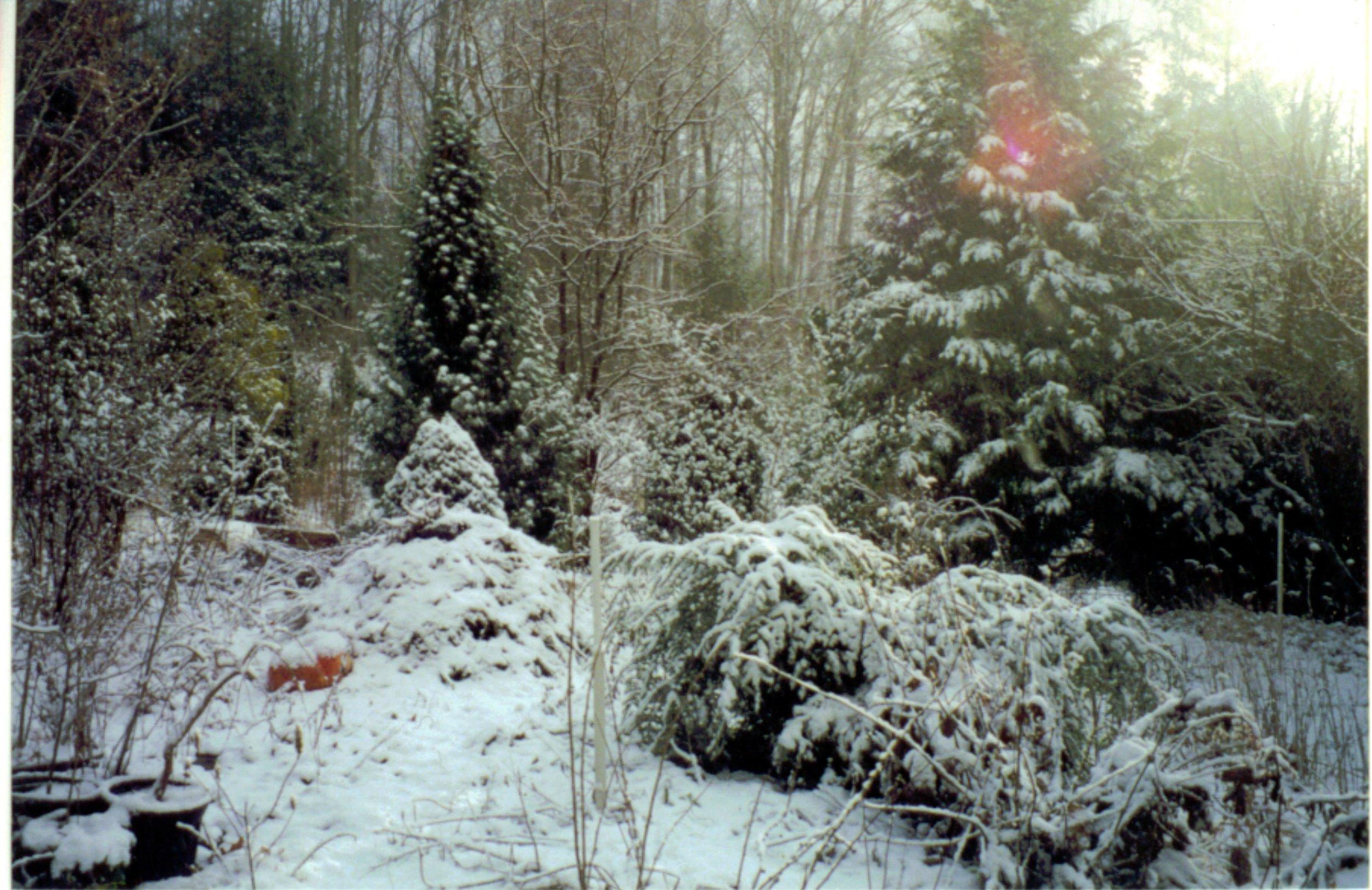 1995 snow scene.JPG