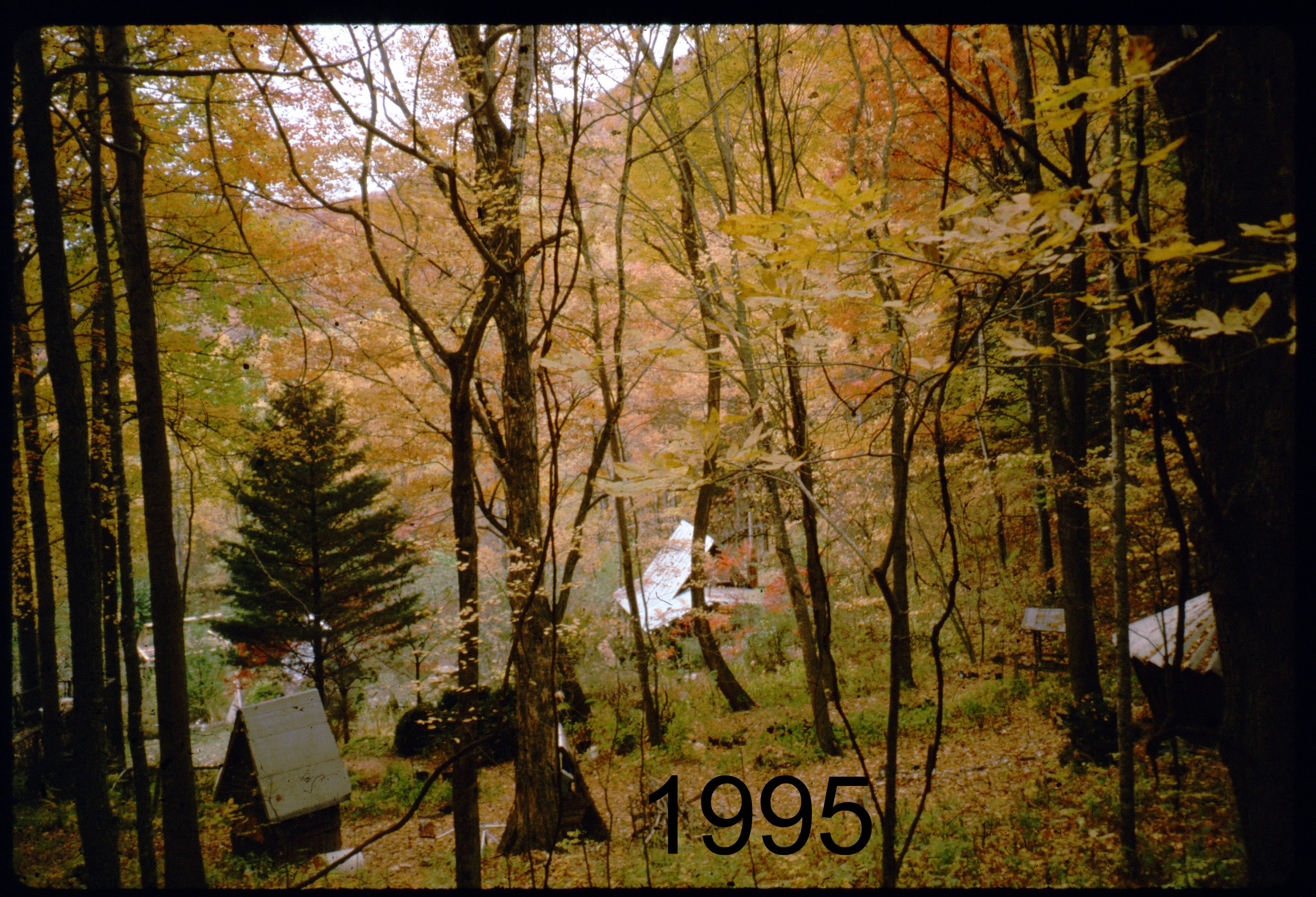 1995 MG from NF autumn.jpg