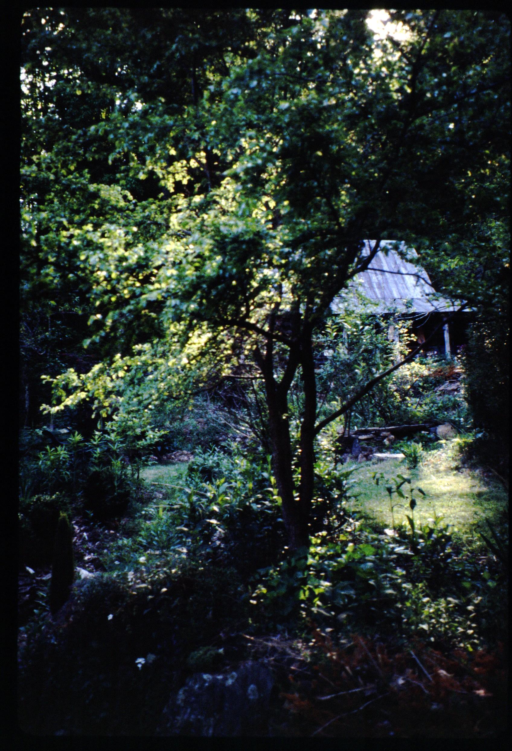1996 lawn - cabin.jpg