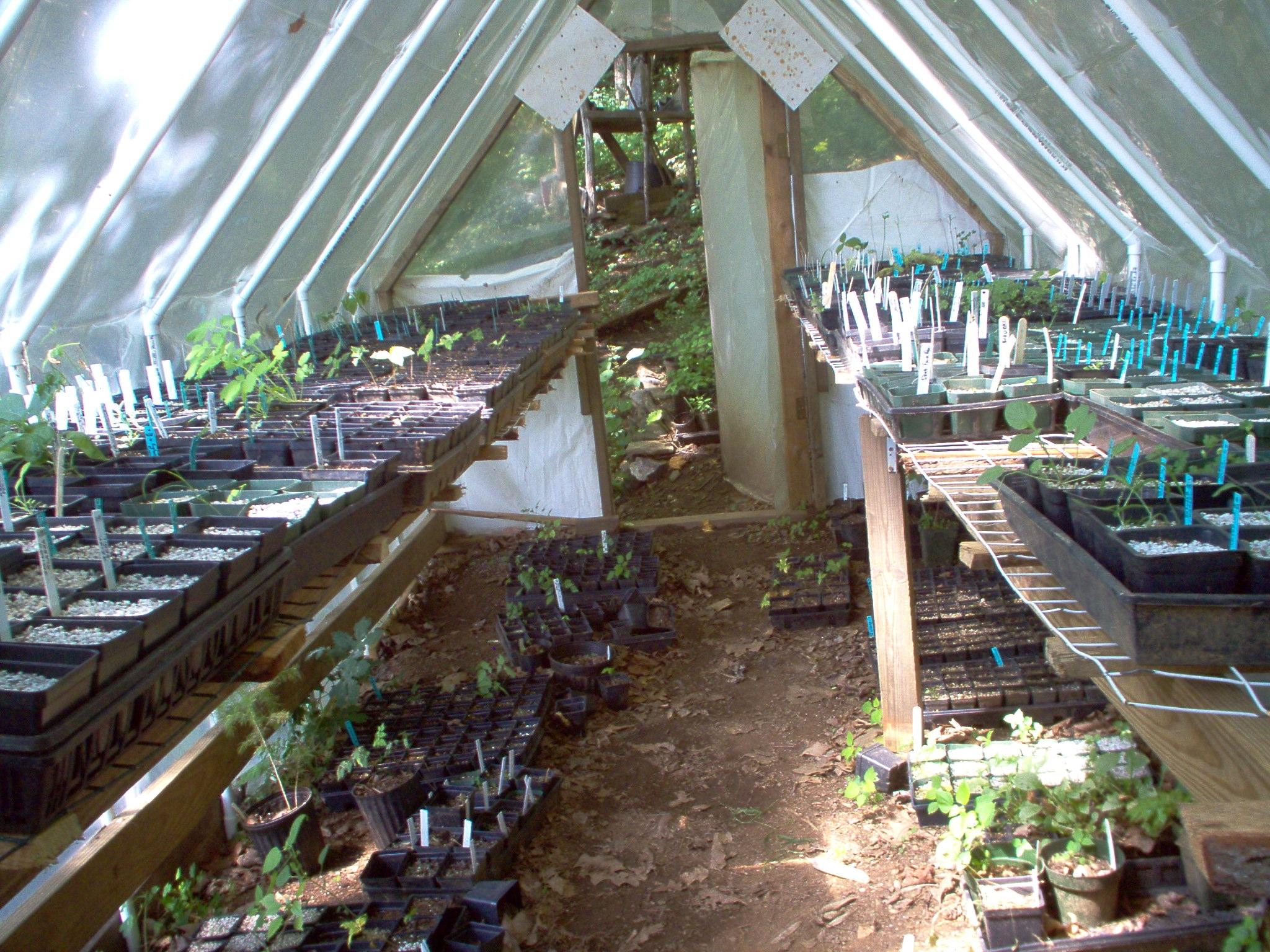 2004 seedstart GH.JPG