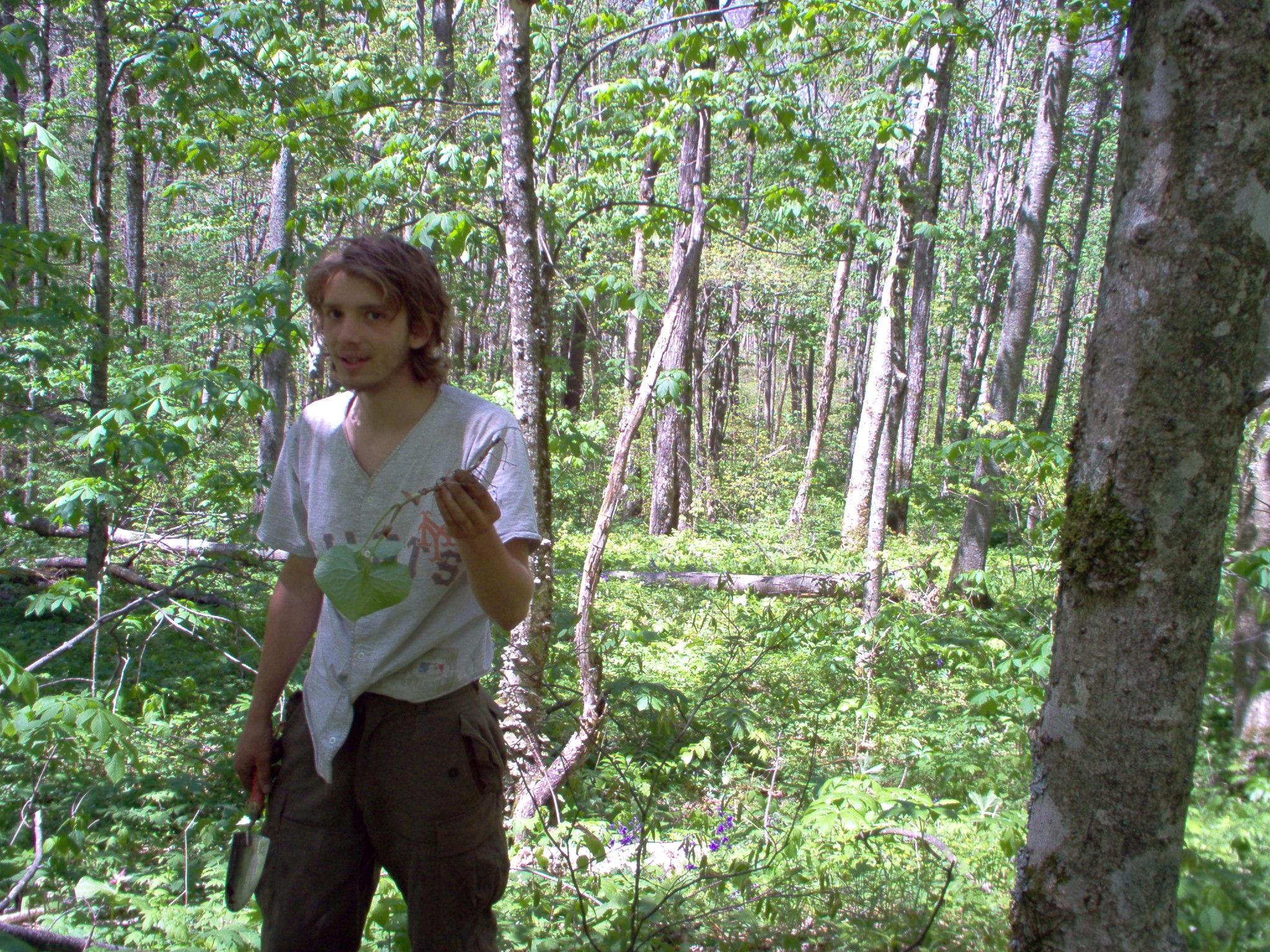 2004 spring wildcrafting 2.JPG
