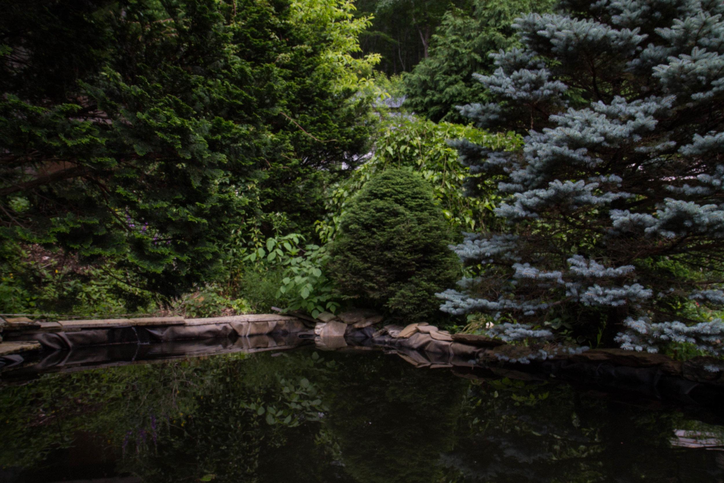 池塘,劳伦·莱特博迪2017年摄。