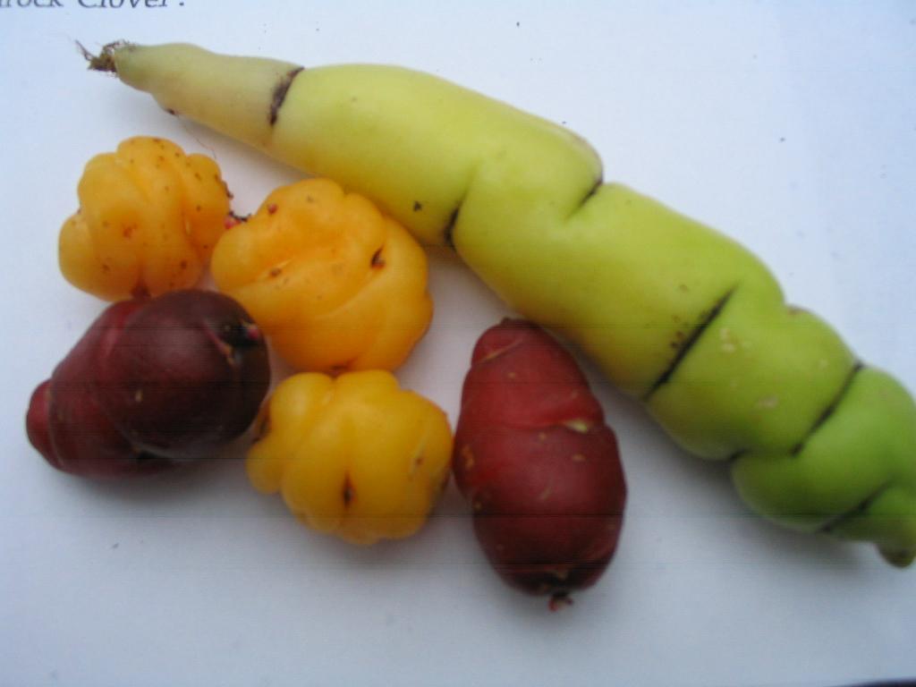 oca and mashua tubers