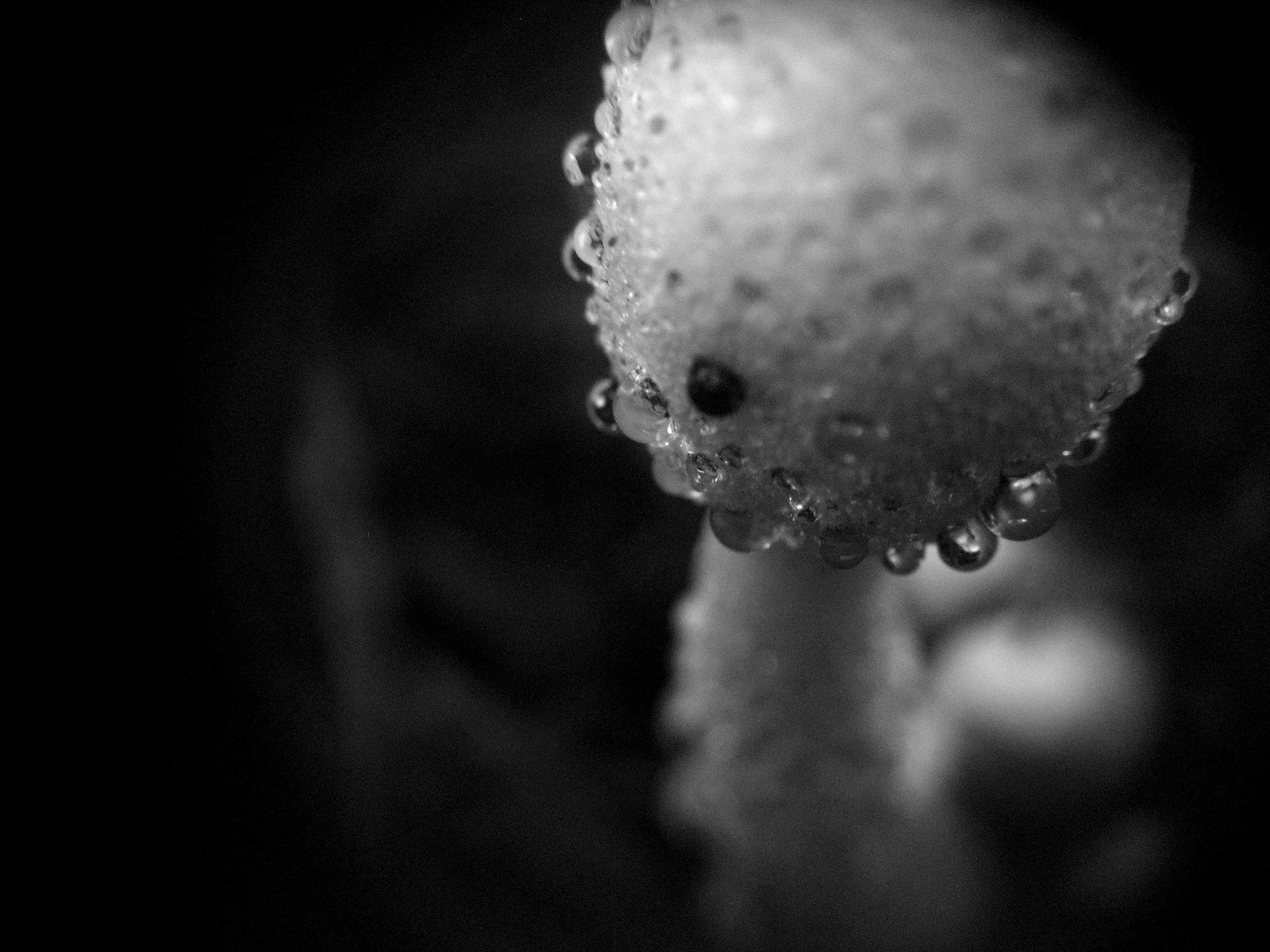 Dotshroom.jpg