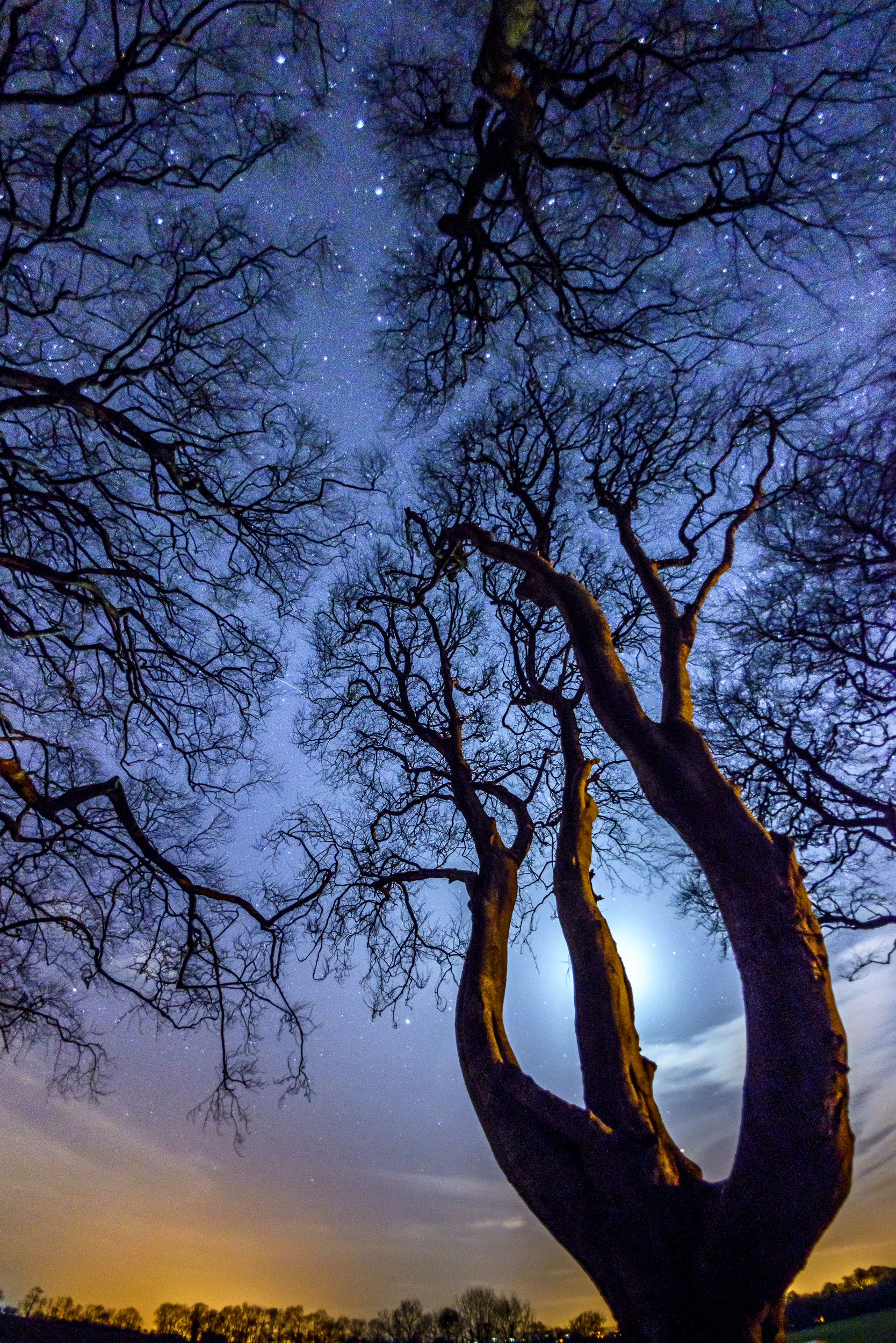 Reach For The Stars, Dark Hedges