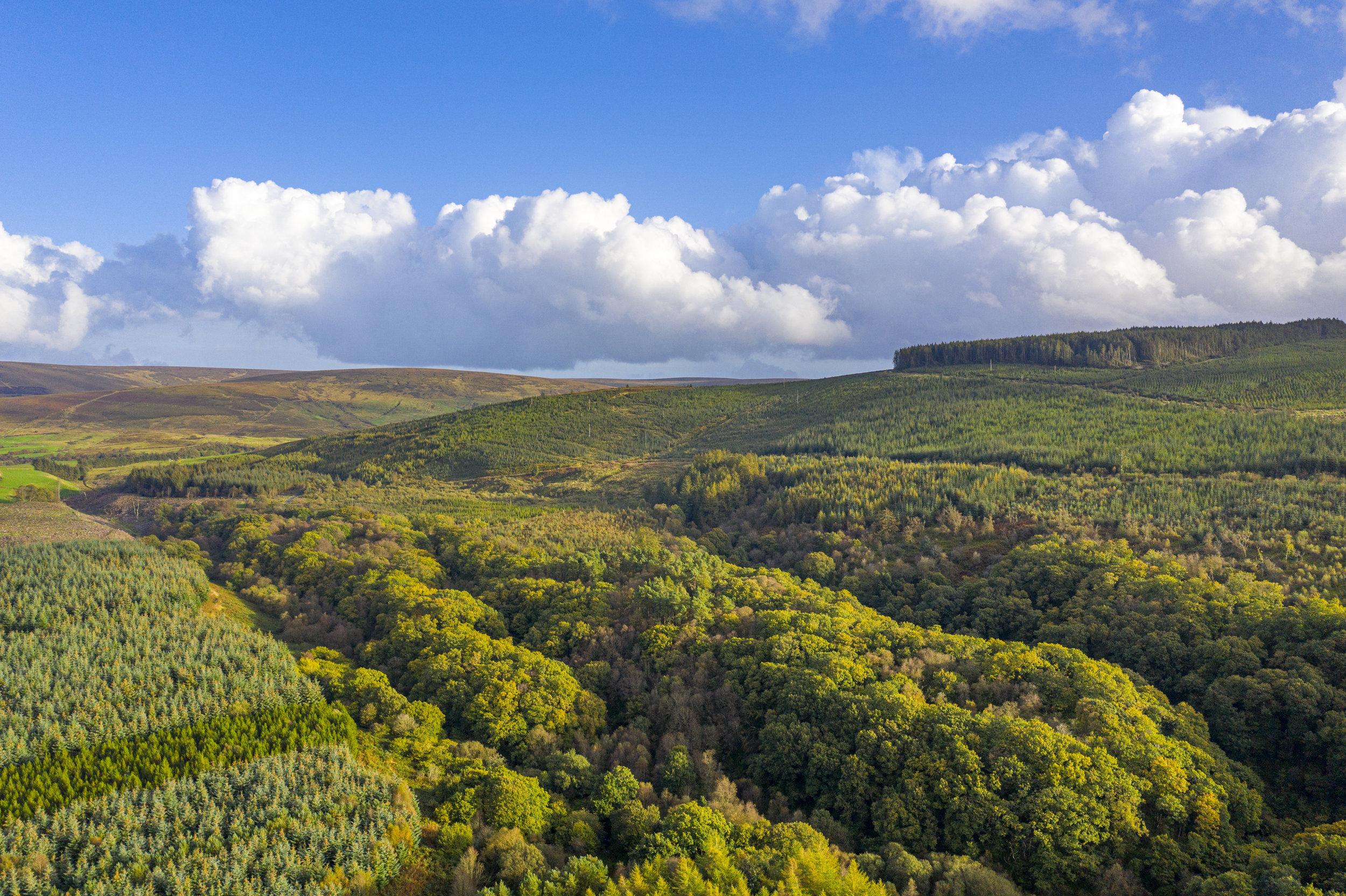 Drone photo of the Breen Oak Wood, Glenshesk, Co Antrim