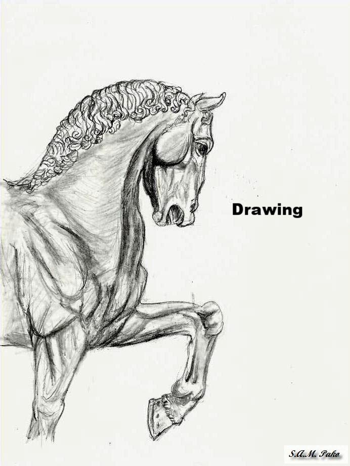 d horsey1.jpg