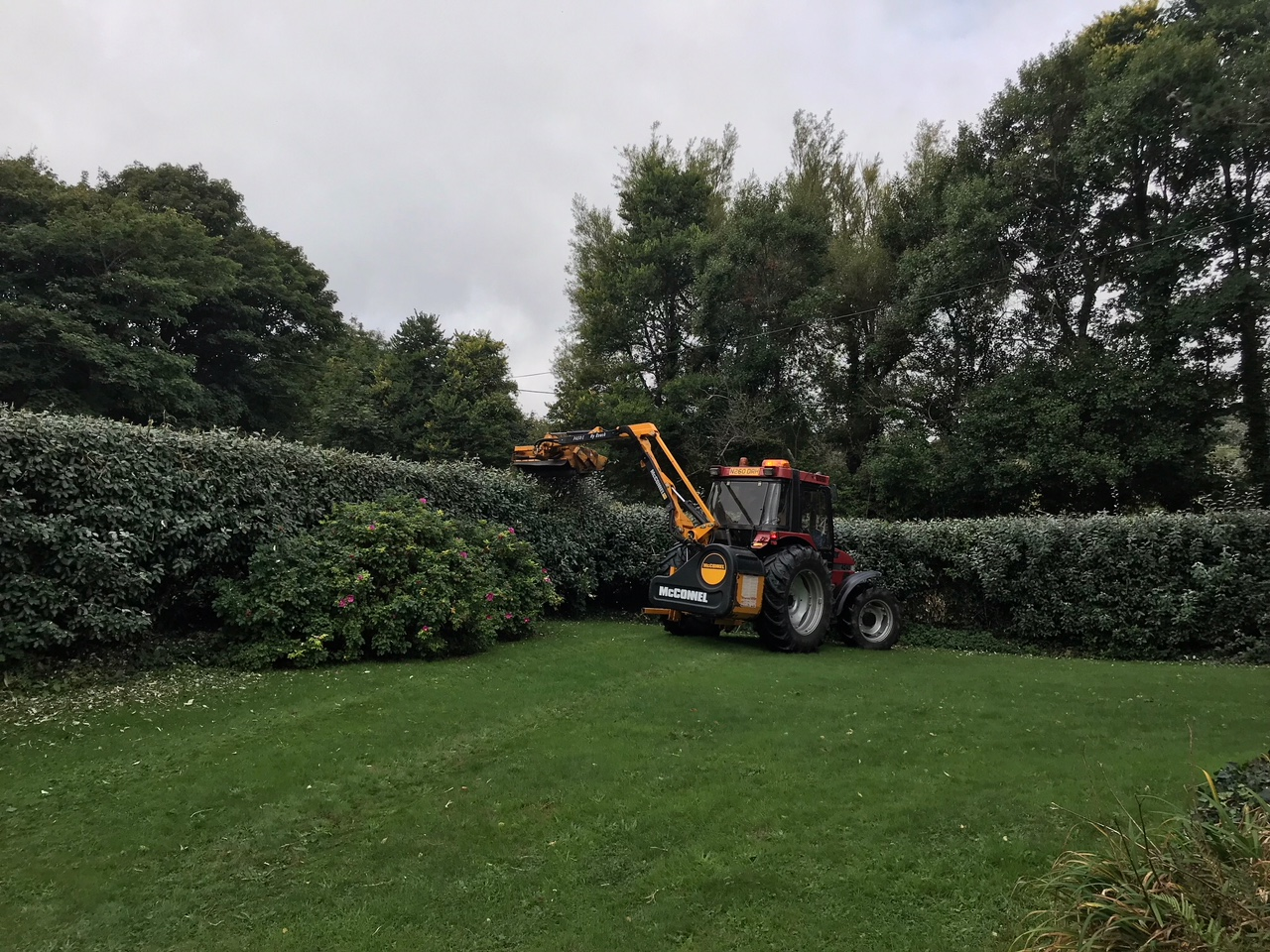 Hedge cutting 1.jpg