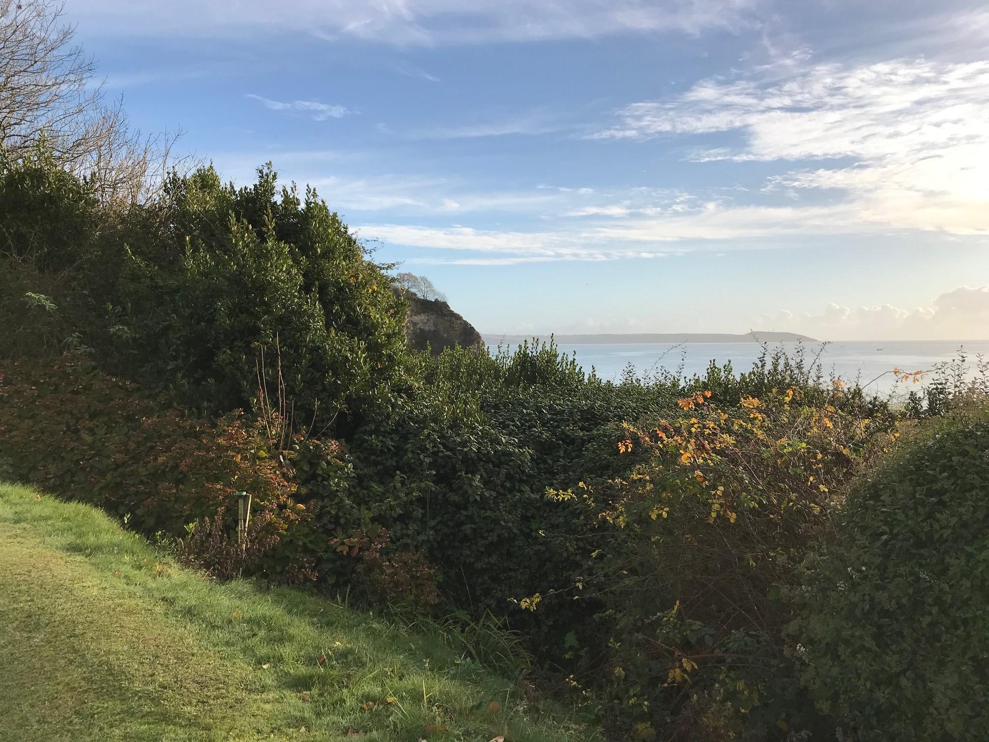 Gull rock hedge.jpg
