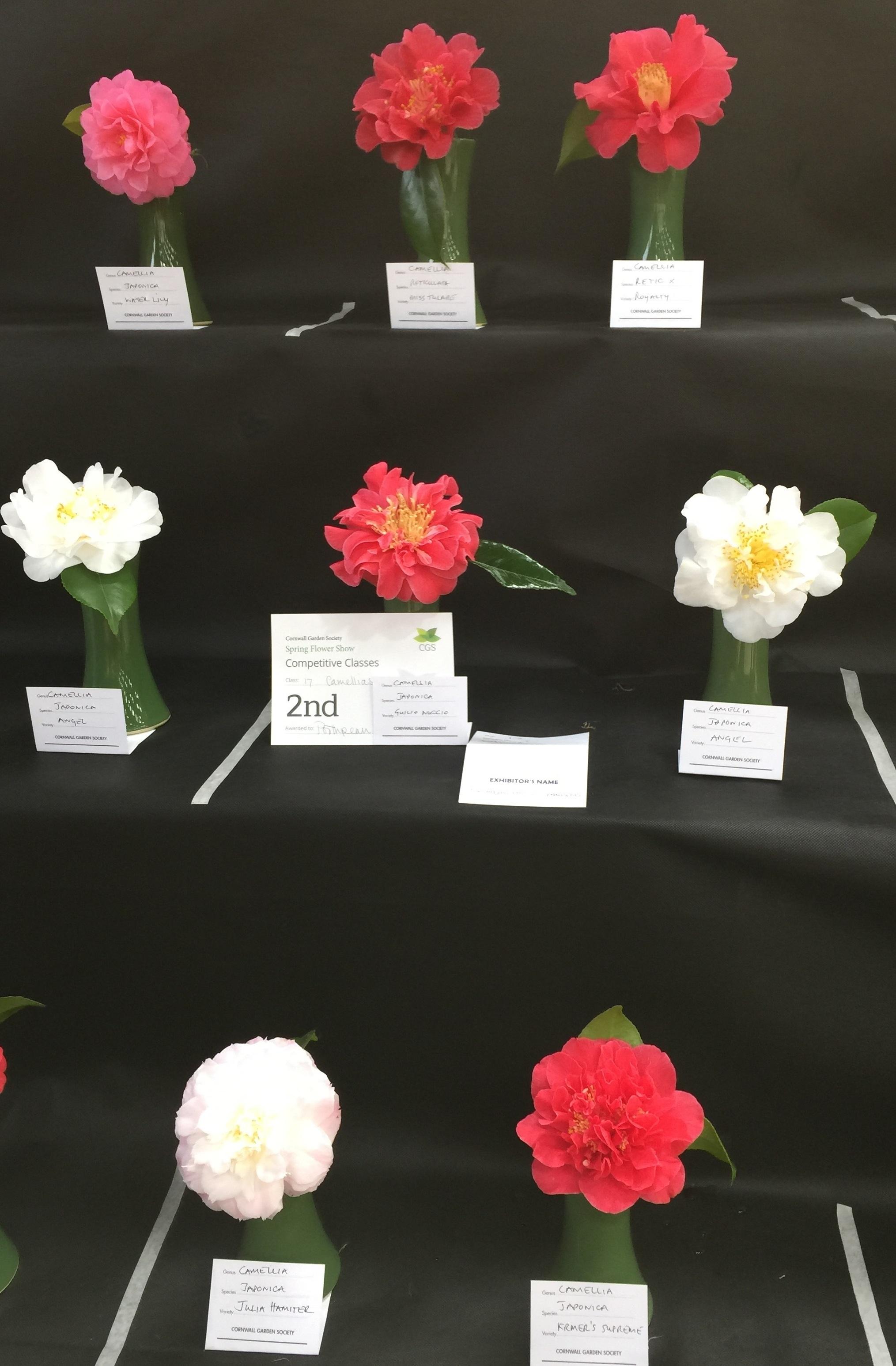 2019 Cornwall flower show.jpg