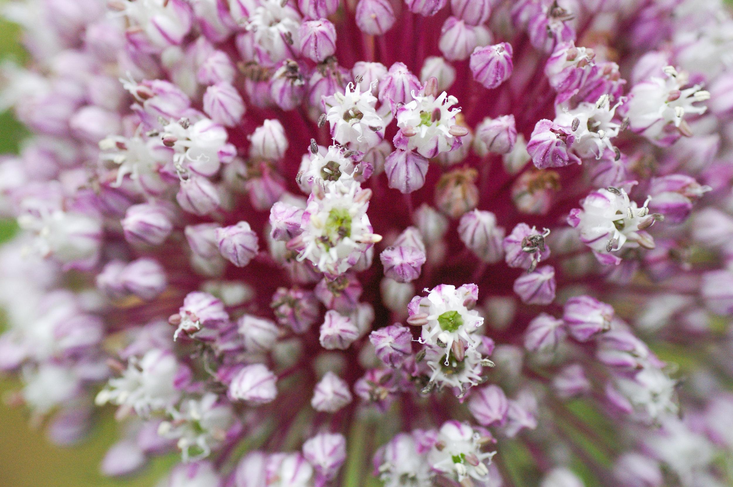 Garden Series_TIC-12.jpg