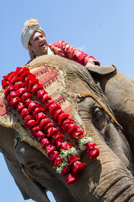 One of our grooms having a blast on the elephant during his baraat!