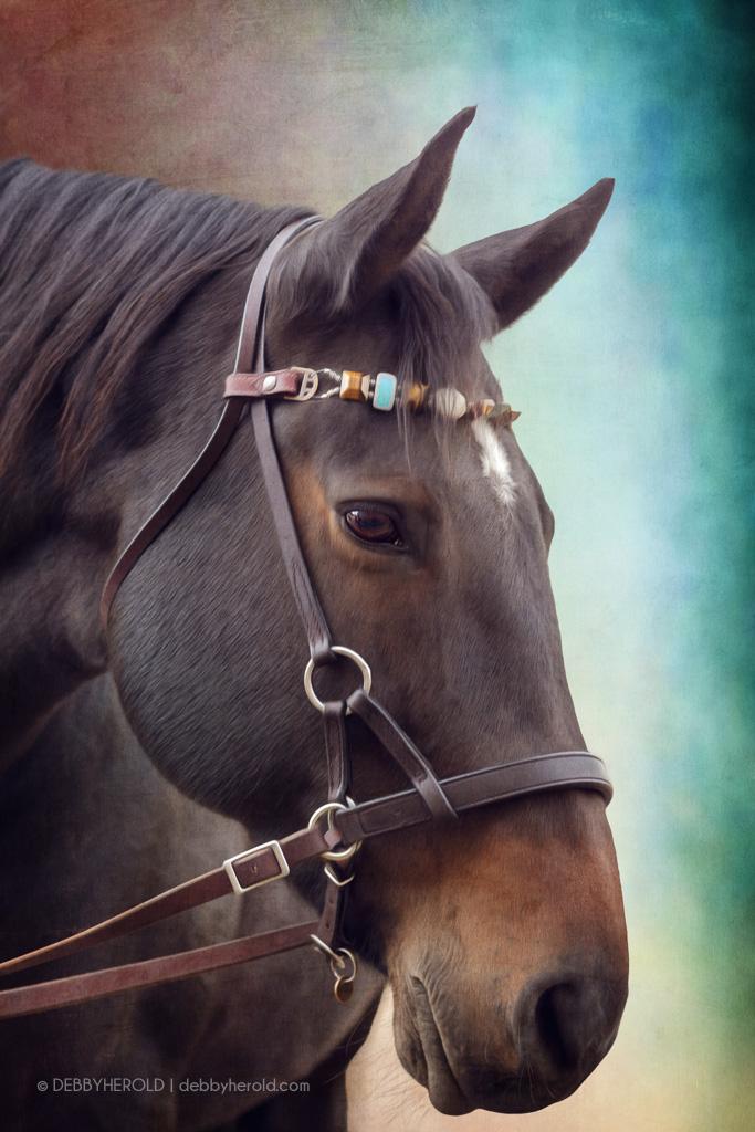 Alaska, a Percheron cross horse