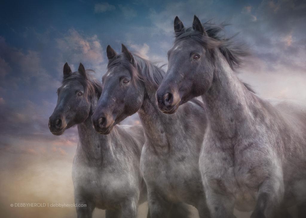 Three Roan horses