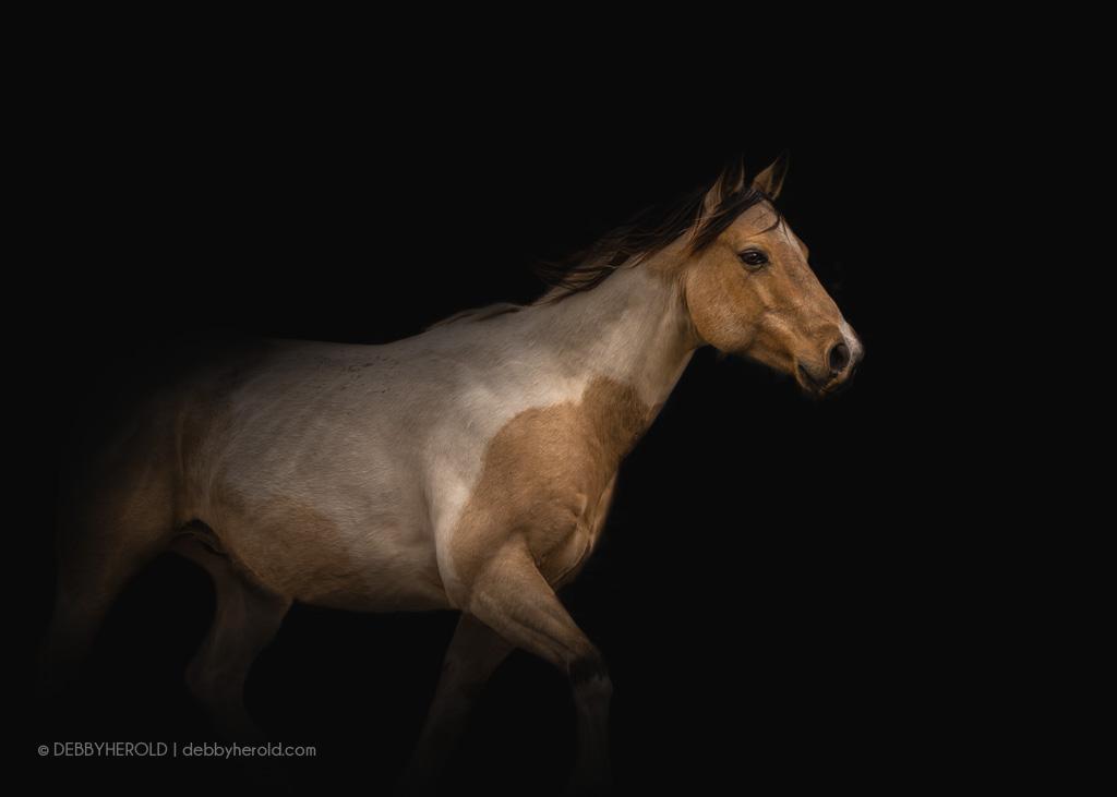 Target - a Buckskin Paint horse