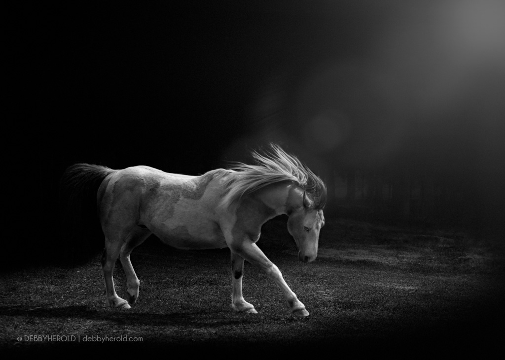 Target - a black and white of a Buckskin Paint horse