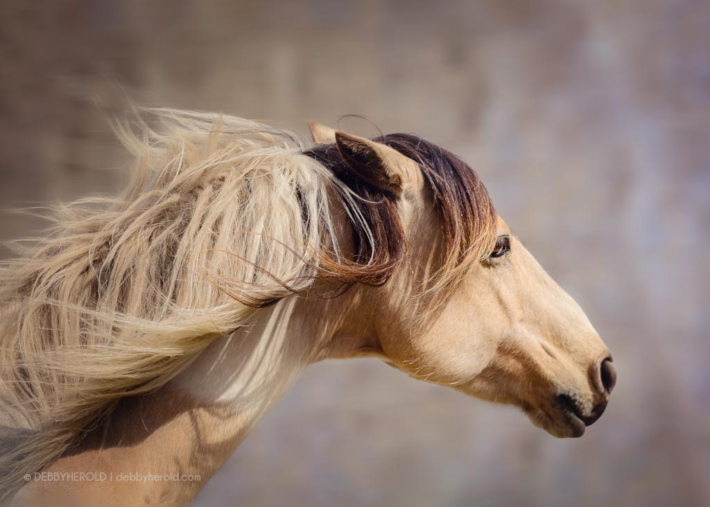 Buckskin Paint horse named Target