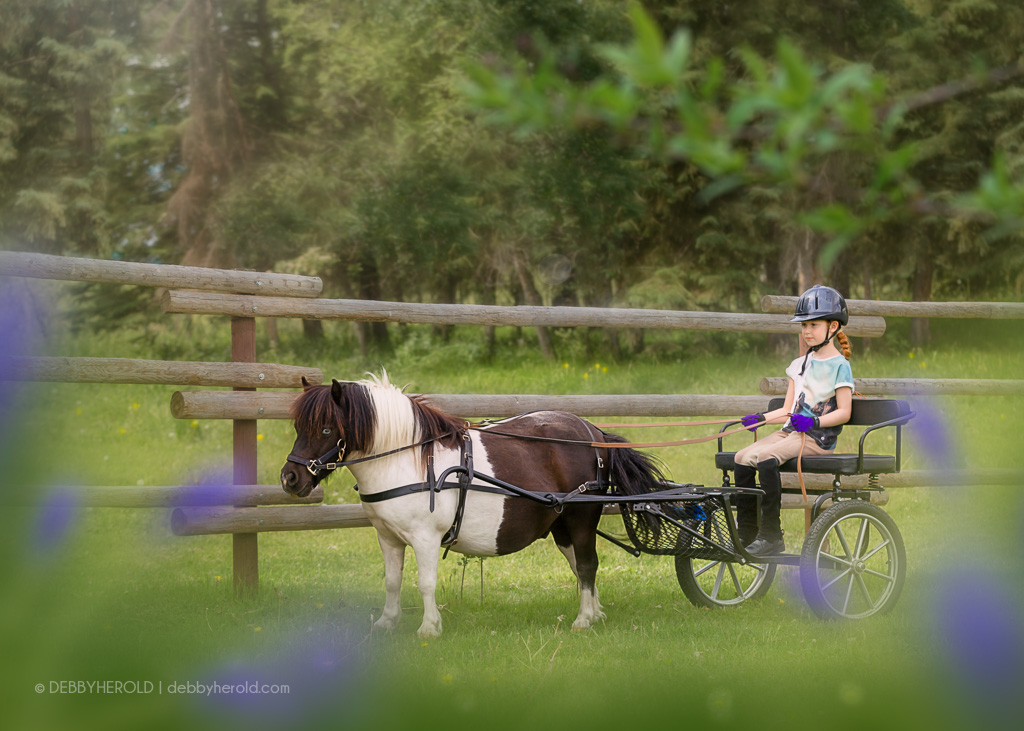 Girl in cart with miniature horse