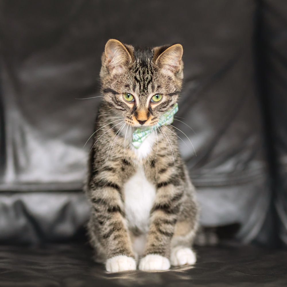 Cat Cudi (available through Pawsitive Match)