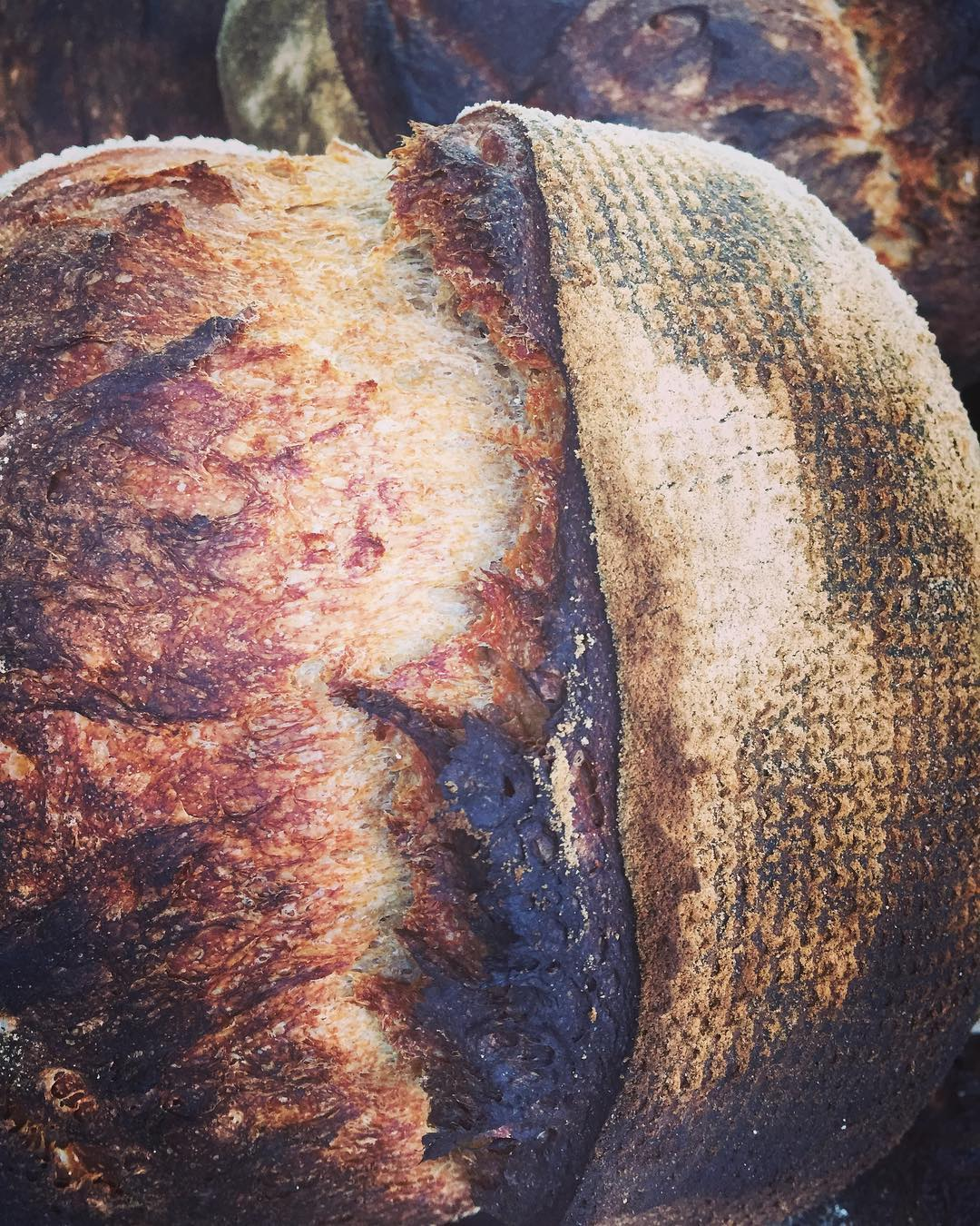 Bread & Baked Goods - Whole-grain. Naturally leavened. Made by hand. Traditionally.Simplicity in compostion.