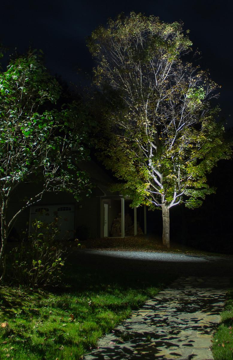 Éclairage paysager, arbres