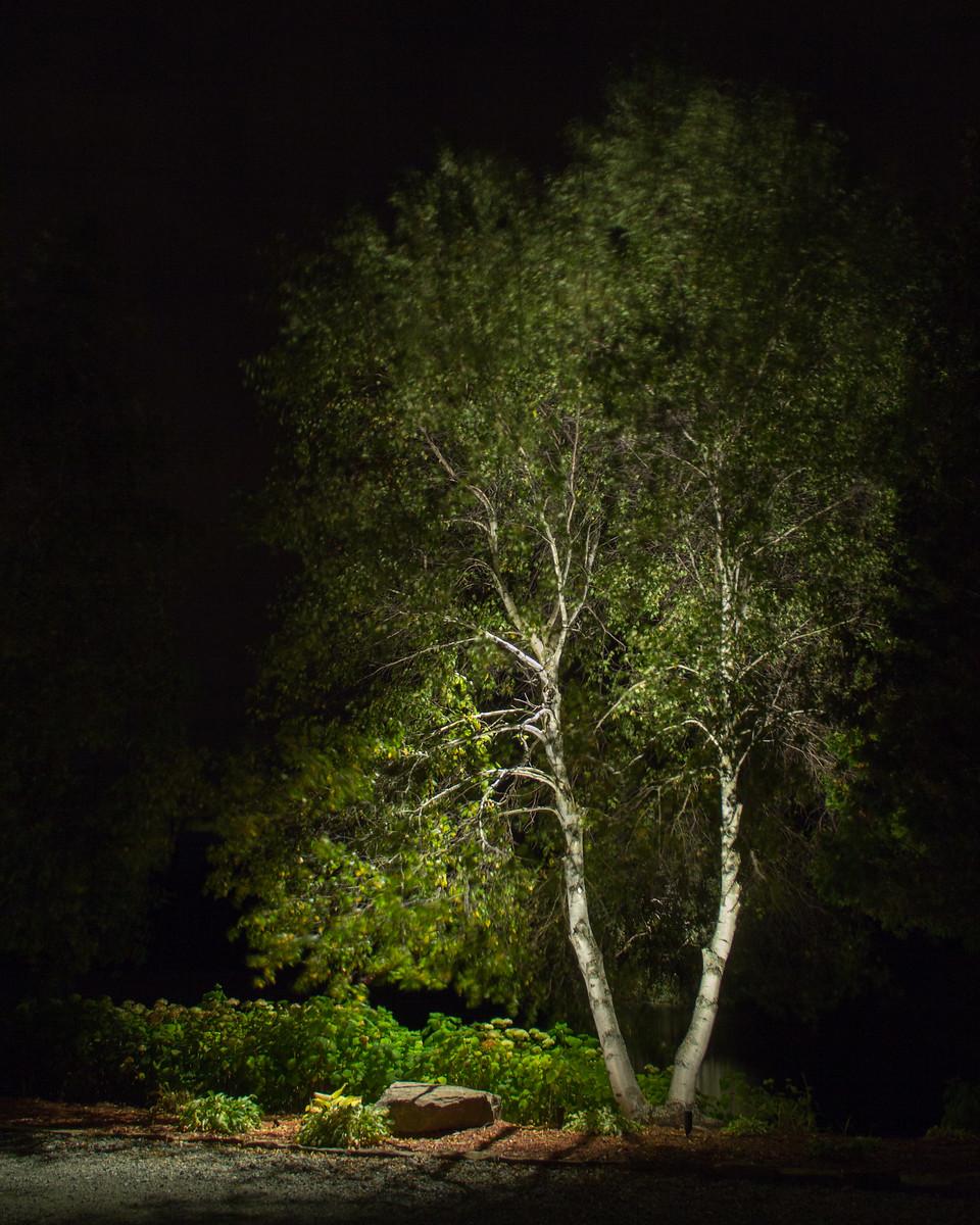 Éclairage paysager,  arbre