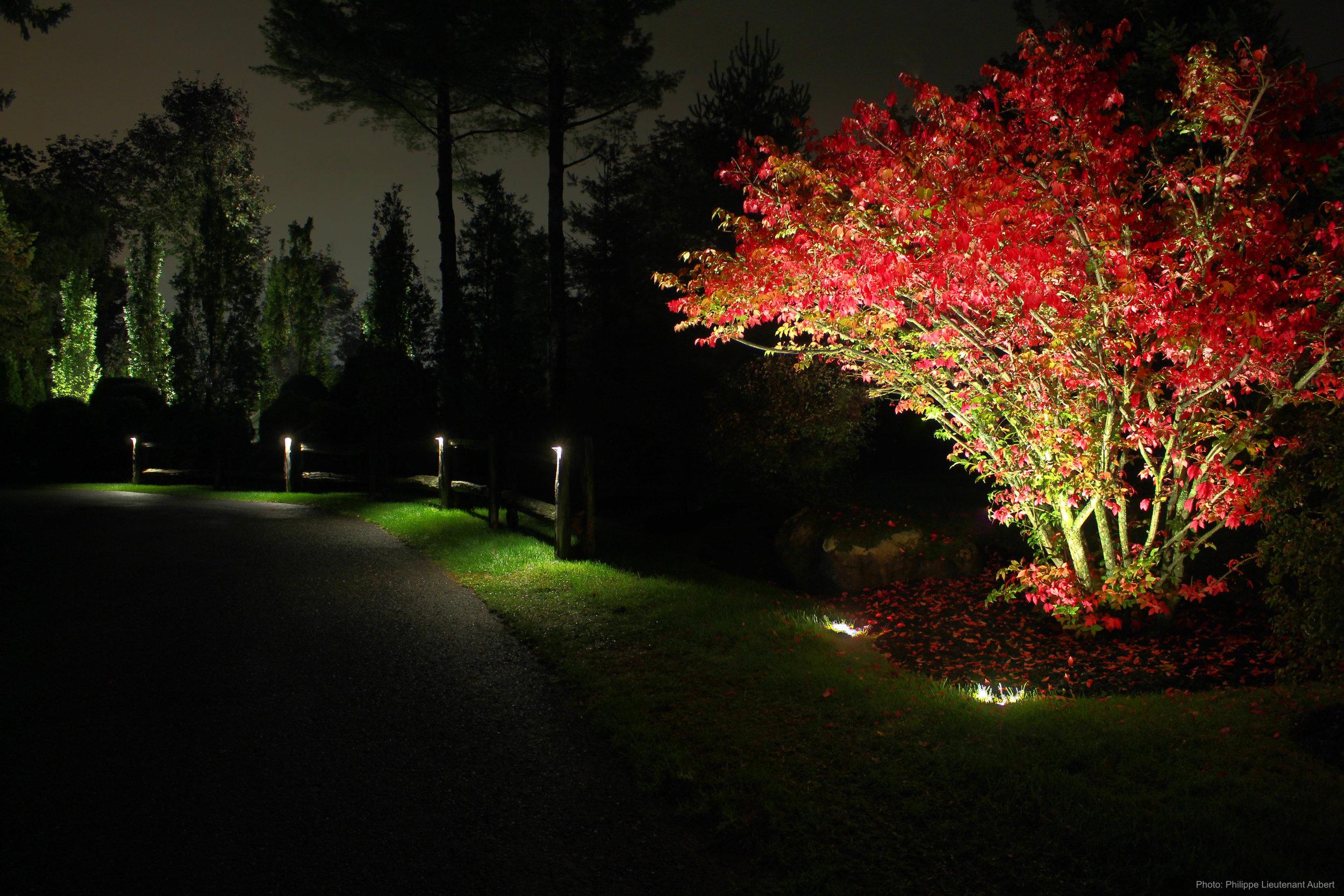 Éclairage paysager,  chemin