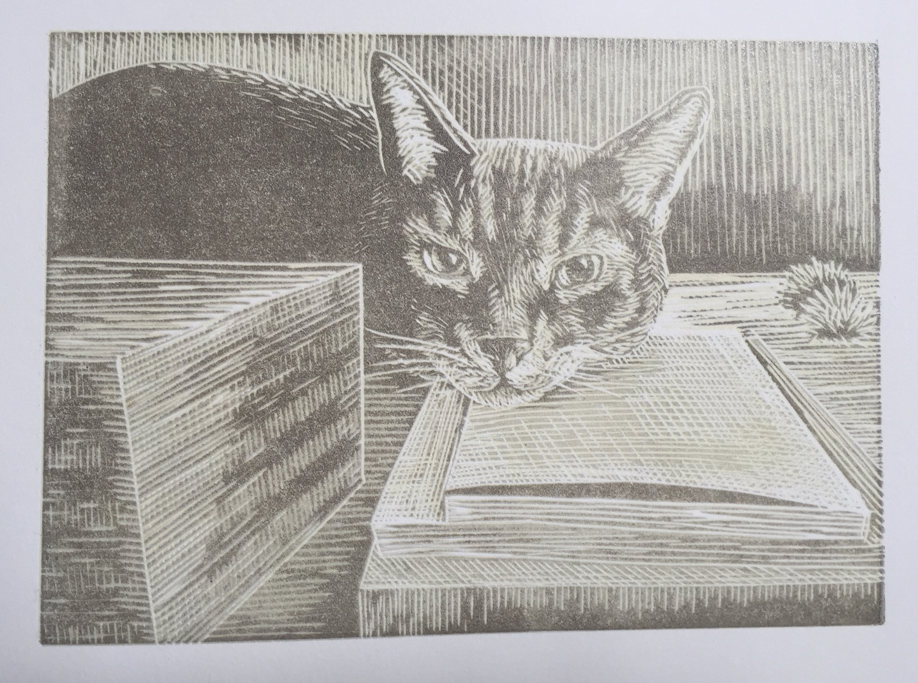 Here is the next layer of darker grey printed on my reduction linocut of Sliver. A darker grey is next which will add definition to the shadows and will give him some more stripes.
