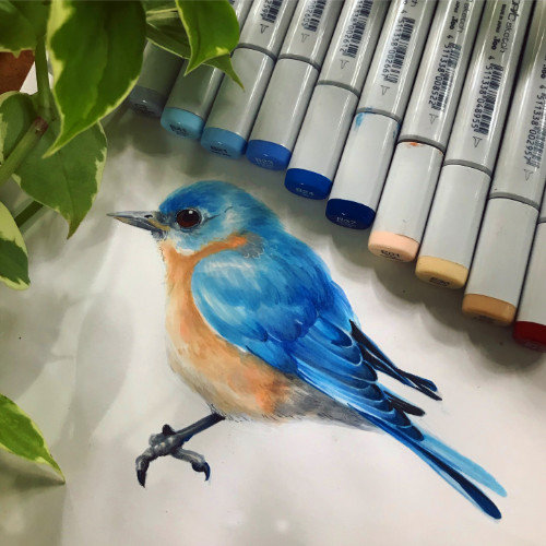 5cddd79ae4ed73f717208101_Blue Bird - COPIC.jpg