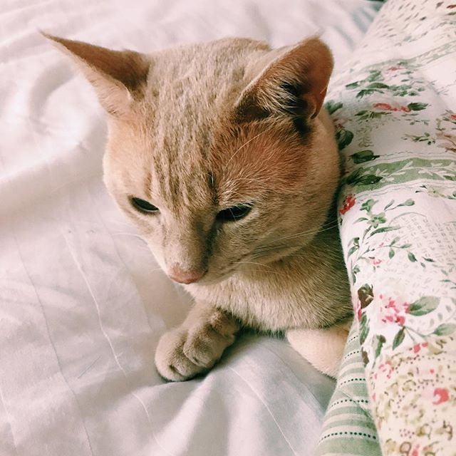 Biscuit is all grown up and ready for the fall air . . . . . #morningslikethese #seekthesimplicity #rainydays #livebeautifully #fluffypack #cat #cutecat #kitten #meow #dreamy #thehappynow #livethelittlethings #aquietstyle #seekthesimplicity #theartofslowliving #fall #cozy #momentslikethese #authentic