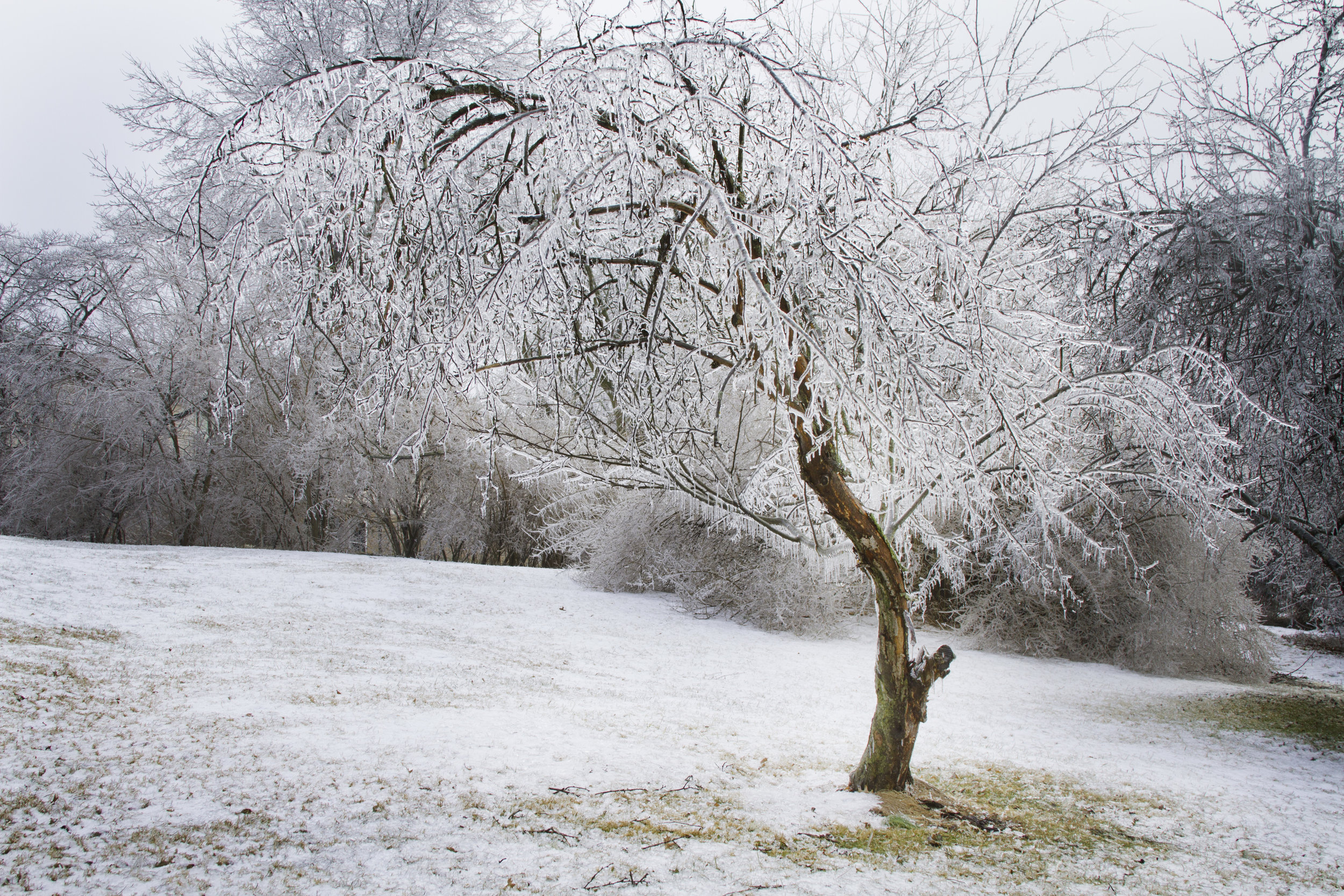 Frozen Tree 1.jpg