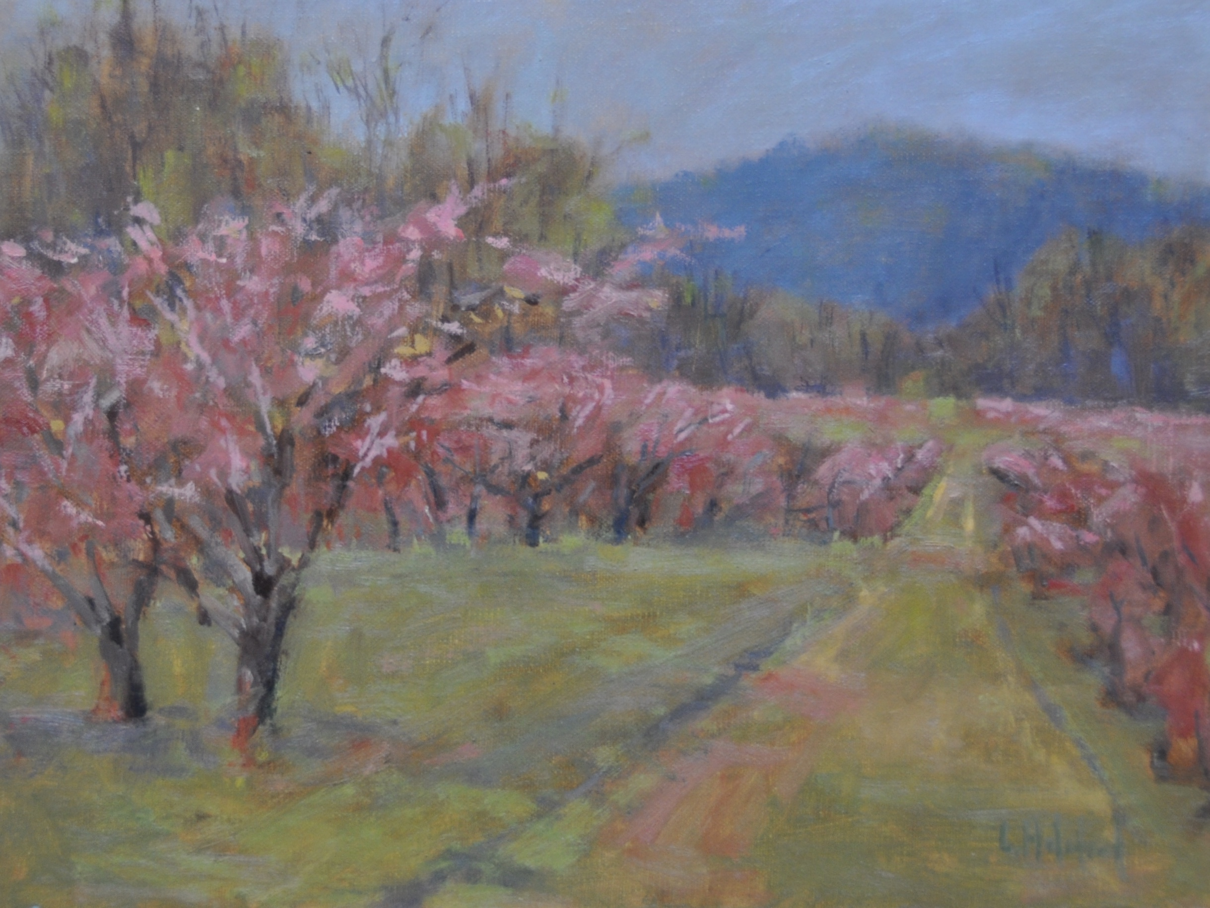 Orchard Pink, Oil on linen, 9 x 12, available