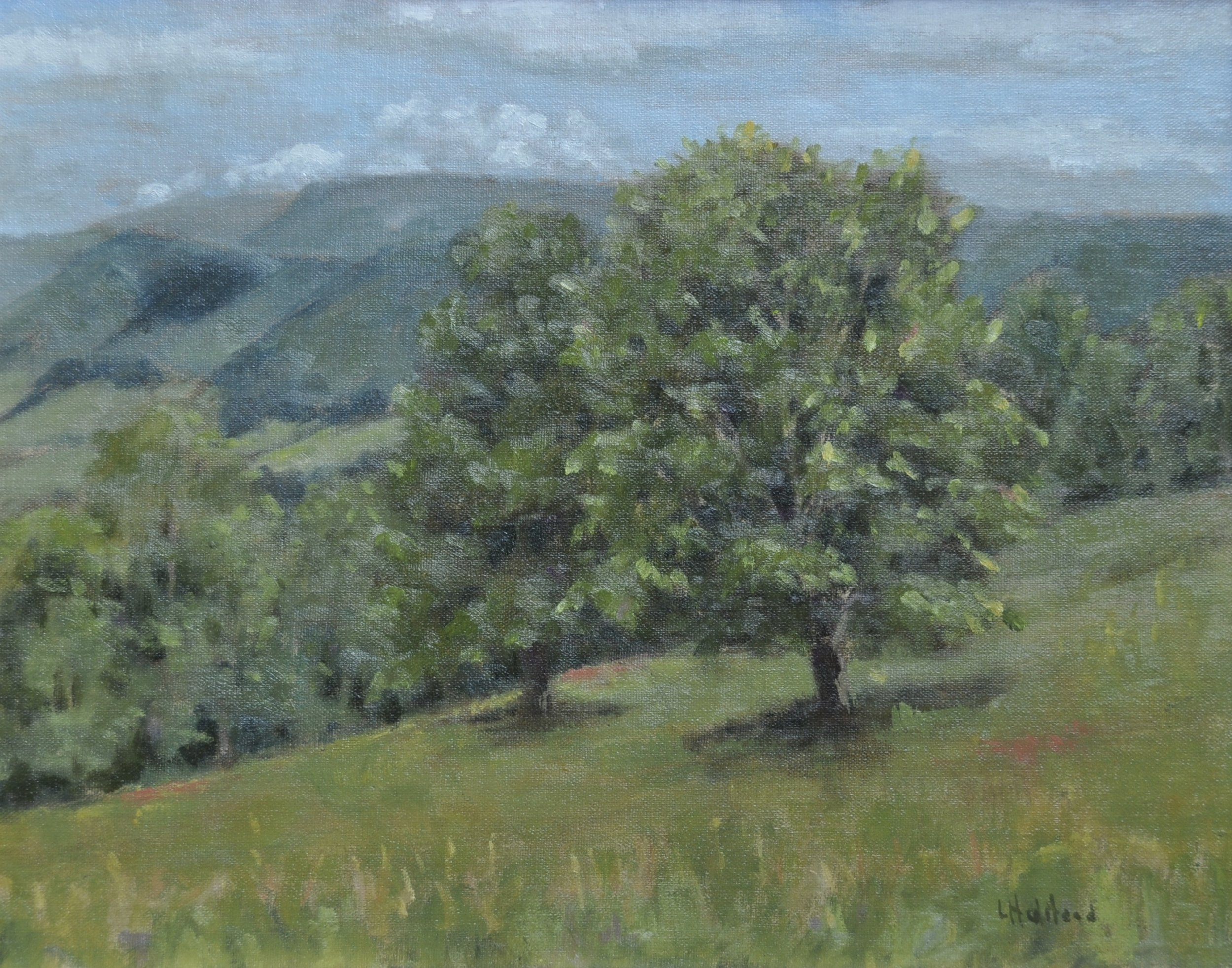 Two Maples, Oil on linen, 11 x 14, available