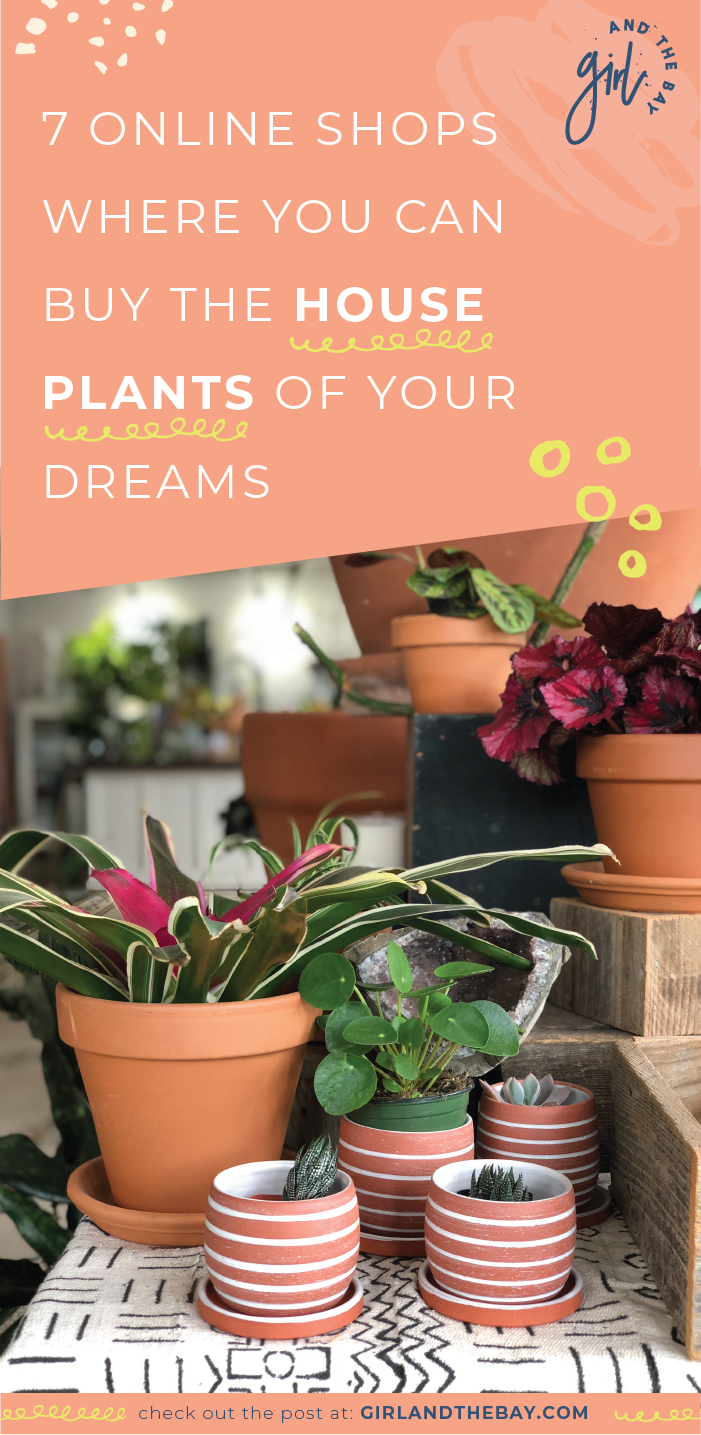 7 Online Shops Where You Can Buy The House Plants Of Your Dreams