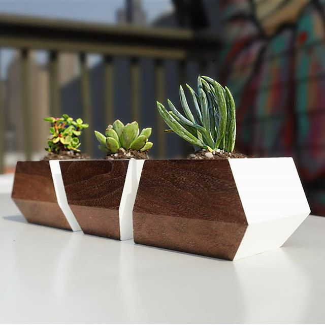 "I made 3 sets of geometric succulent planters 🌱🌿, and the full build video is live on YouTube now!  LINK IN MY BIO....SWIPE ➡️ to see all 3 variations on this geometric #planter design: (1) walnut and white, (2) spalted maple and white, and (3) walnut and orange.  This is a really simple #diy project...it only takes a 3"" turning blank and some paint to make each set of 3.  An inexpensive steel condiment container works great as a liner, or you can 3D print a liner for the planter (the full build video shows both options). #planters #planterbox #decor #woodworkingproject #woodworking #woodworker #woodwork #succulents #succulentsofinstagram #succulentlove #succulover #succulent #succulentplant"