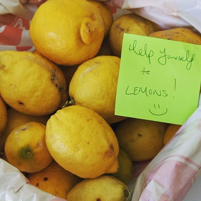 💛This week has been very fruitful 😋 . . 🍋Today had an unexpected delivery of lemons from a student. I've got more lemons than I know what to do with! . . When life gives you lemons... Share them with everyone you know! 😂 . . H E L P  Y O U R S E L F to lemons if you are coming into the Endeavour Hills #ptforthemind yoga studio this week. They have some blemishes on the outside but they are perfect inside 👍 Just like all of us! Am I right? 😊🙏 . . Y'day had a @nobleparkcommunitycentre  yoga student give me some handmade vegan treats as a thankyou for my 'beautiful yoga classes'. Feels really nice to be appreciated. I feel especially surprised as the student base at the community centre is really diverse with many people not having English as their first language. . . So I often have no idea if I'm making any sense. So glad that at least my movements/demonstration and sound of my voice are conveying so much without my words needed. . . Take the time to tell someone nearby how much you appreciate them! It will make their day (and your day too!) . . Go forth and notice the brilliant people around you! Tell 'em too! My challenge to you 😁 . . -Wendy . . . #yogateacher #yoga #lemons #share #give #appreciate #tellpeople