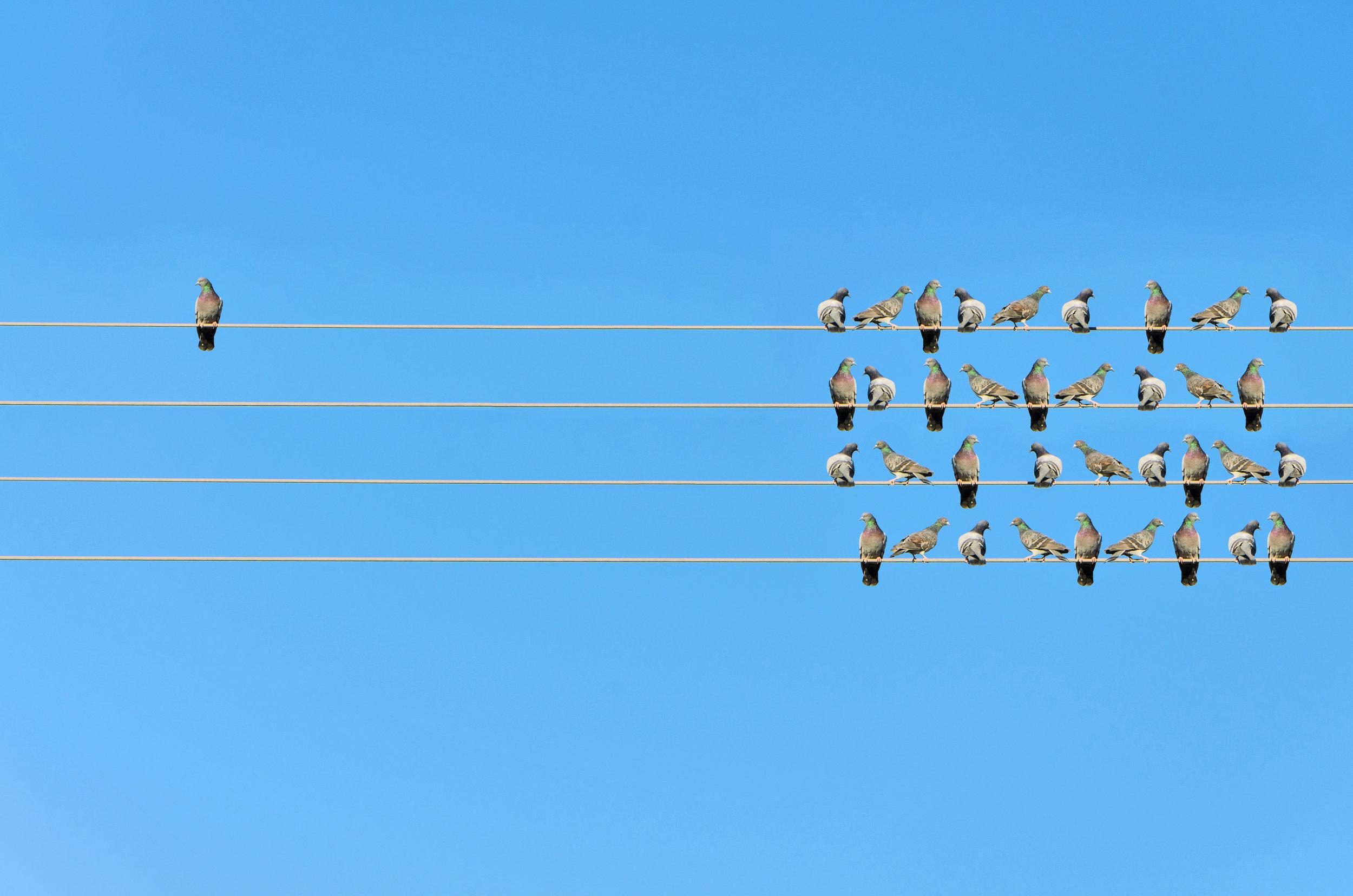 SAHM - Isolated Bird.jpg