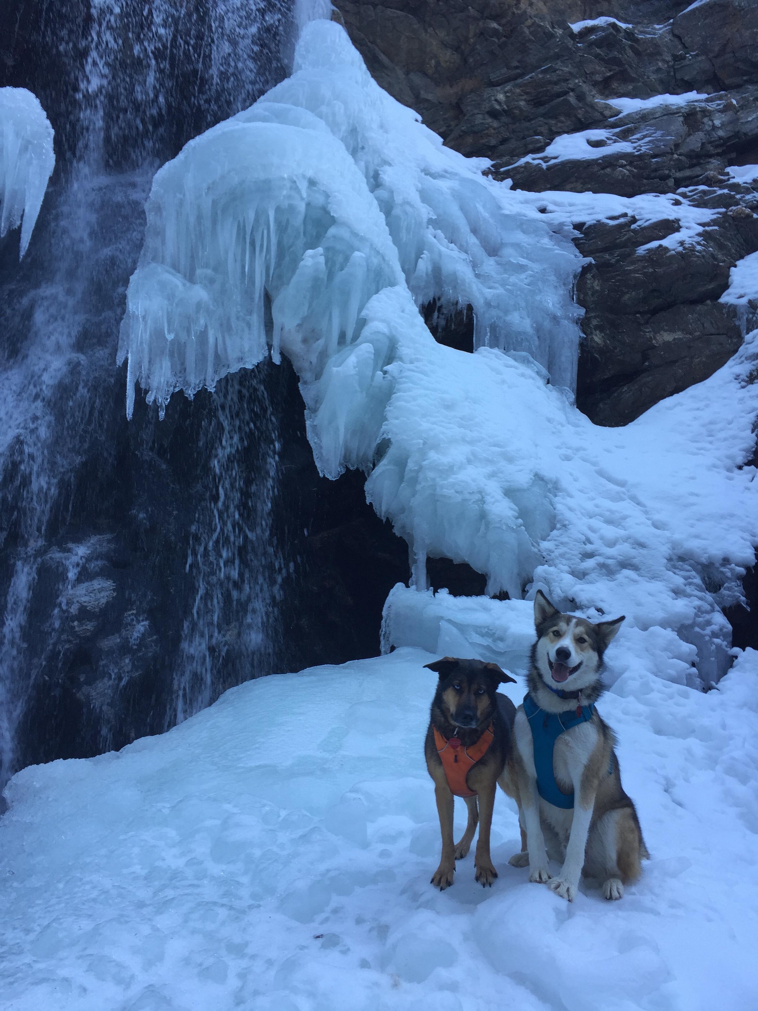 Adams Canyon Pups.jpg