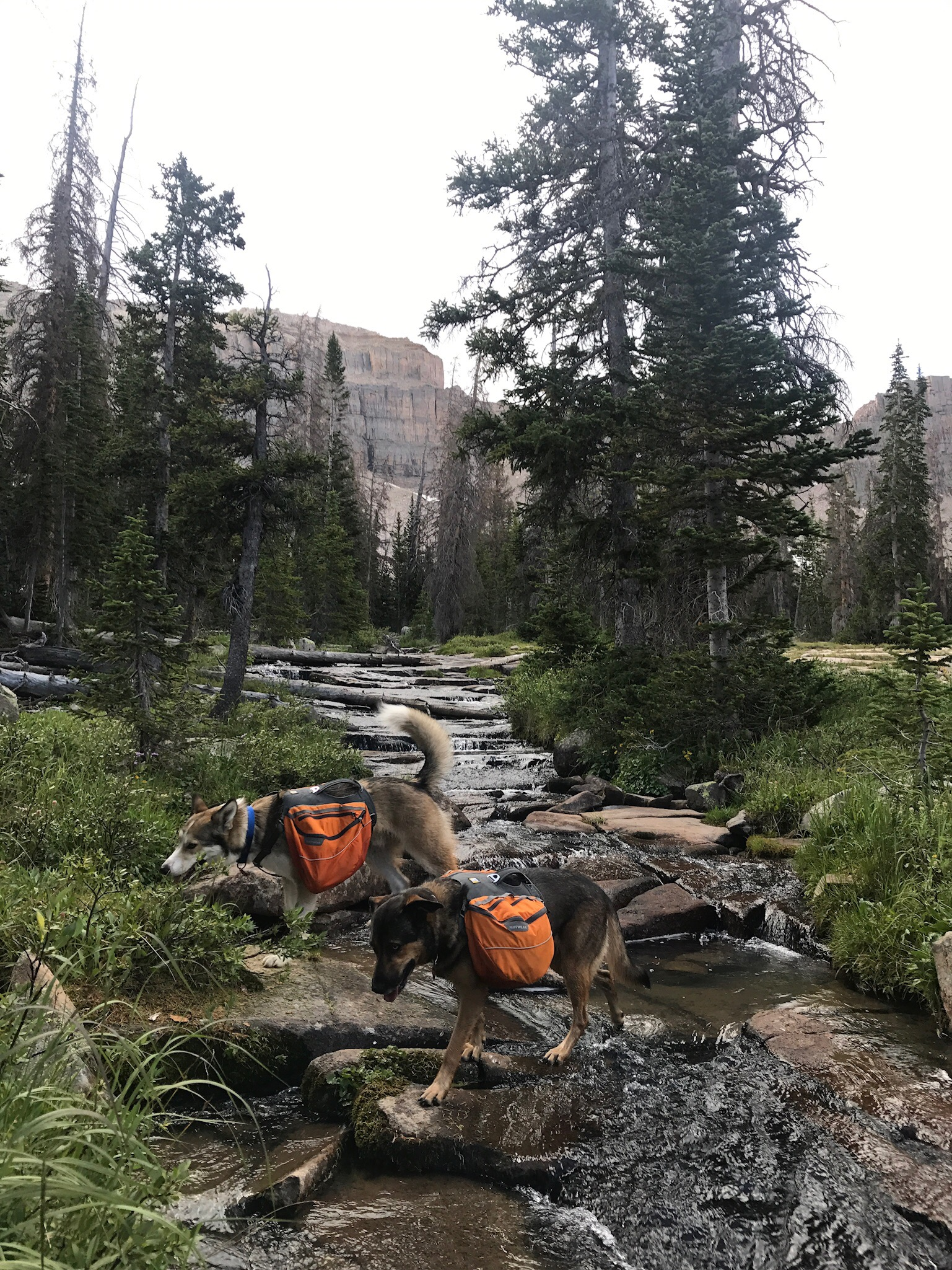 Couple o' backpacking mutts in the High Uintas.