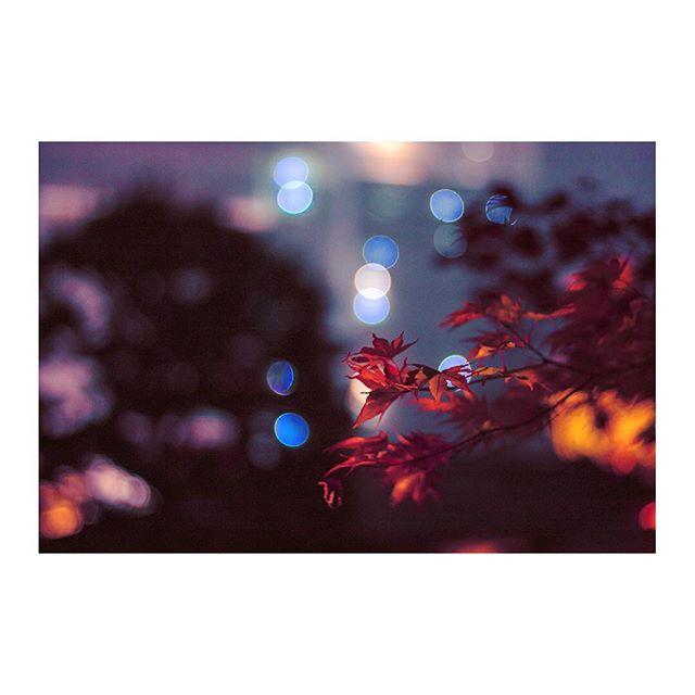 Autumn lights ✨🍁 Kyoto, 10/2010 .  #autumn #autumnleaves #fall #autumcolors #maples #momiji #もみじ #紅葉 #nature #bokeh #bokehlicious #ぼけ #秋  #🇯🇵 #japan #日本 #kyoto #京東 #japanesegarden #日本庭園 #japantrip #travel #nightphography #photography