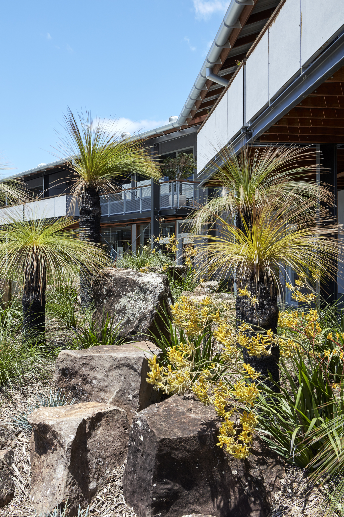 3. The landscaping - Hear me out. It's incredible. You will be inspired by the tropical native garden vibes. Just trust us. If you appreciate foliage as much as we do… just have a look around. There is our favourite spear grass, kangaroo paw combo just outside our window.