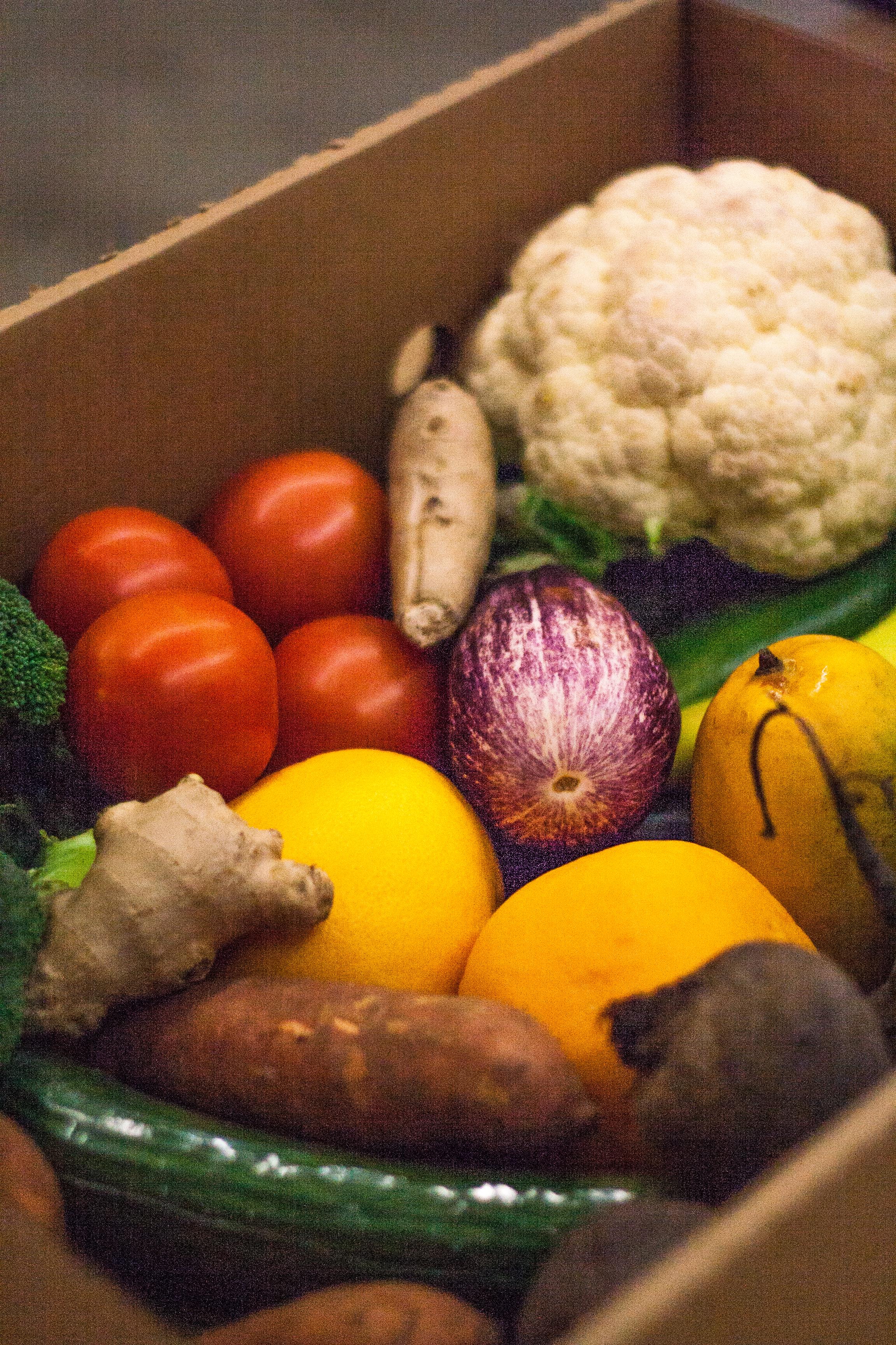 Food Fund-3.jpg
