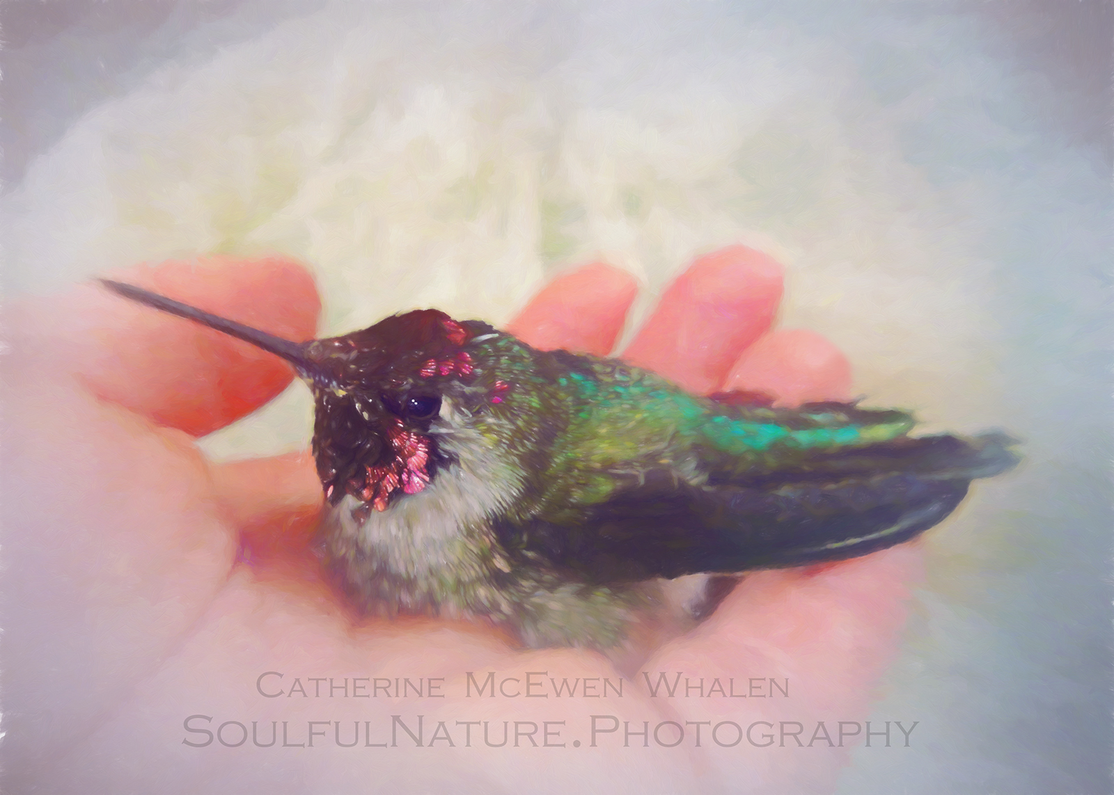 090717_Hummer_7487-inMyHand_5x7-color-adjustment-Paint-a.jpg