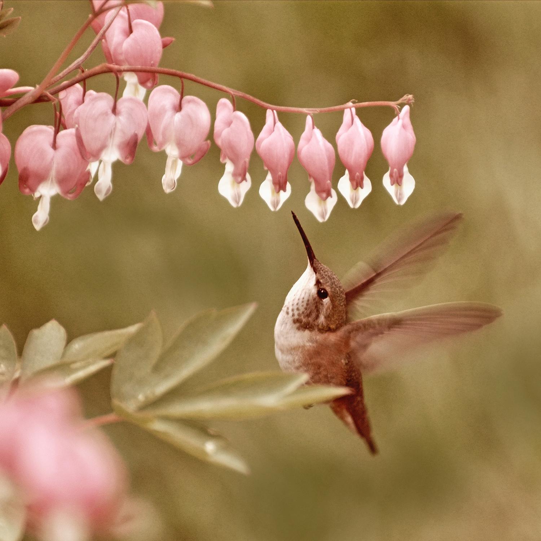 No. 146 - Hummingbird - One Tiny Thing