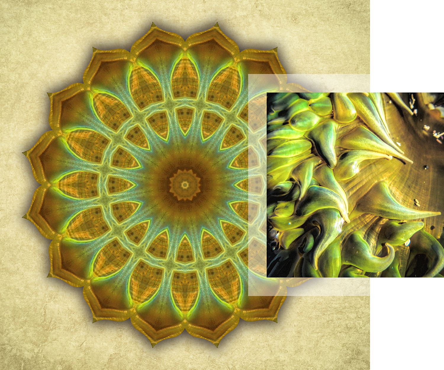About-Mandalas-Green-and-Amber-Anemone_1500w72r.jpg