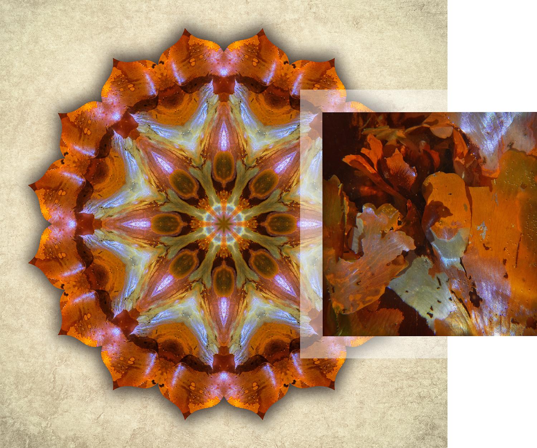 About-Mandalas-Iridescent-Seaweed_1500w72r.jpg