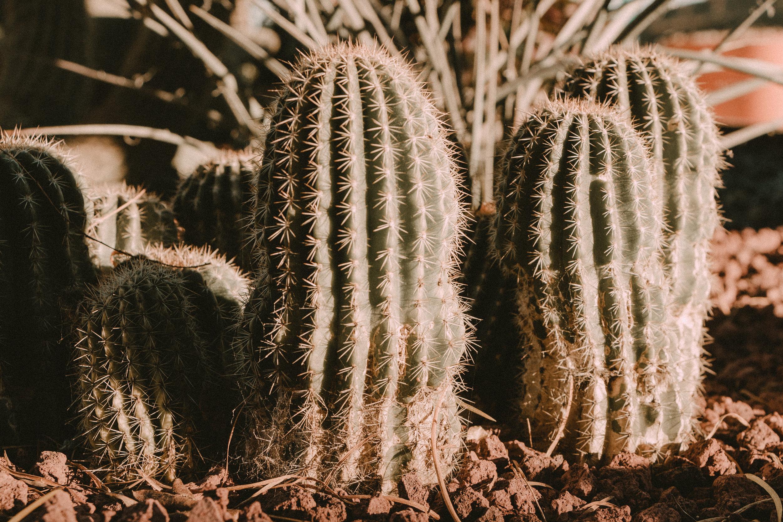 arboretum-13.jpg